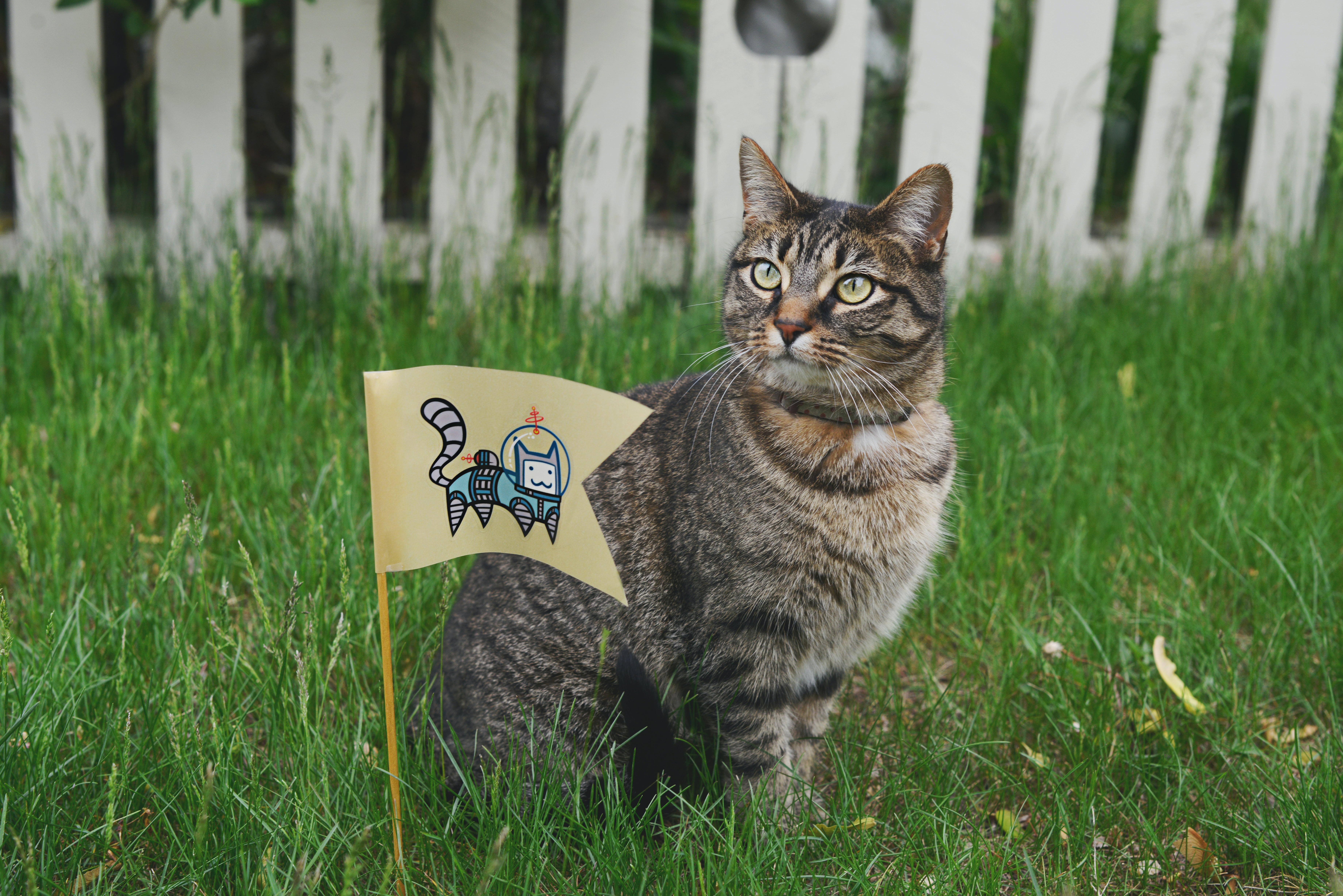 A tabby cat sitting next to a flag with a cartoon astronaut cat picture