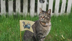 An intrigued cat sits in grass next to a flag planted in front of it with an astronaut space kitty sticker on beige fabric.