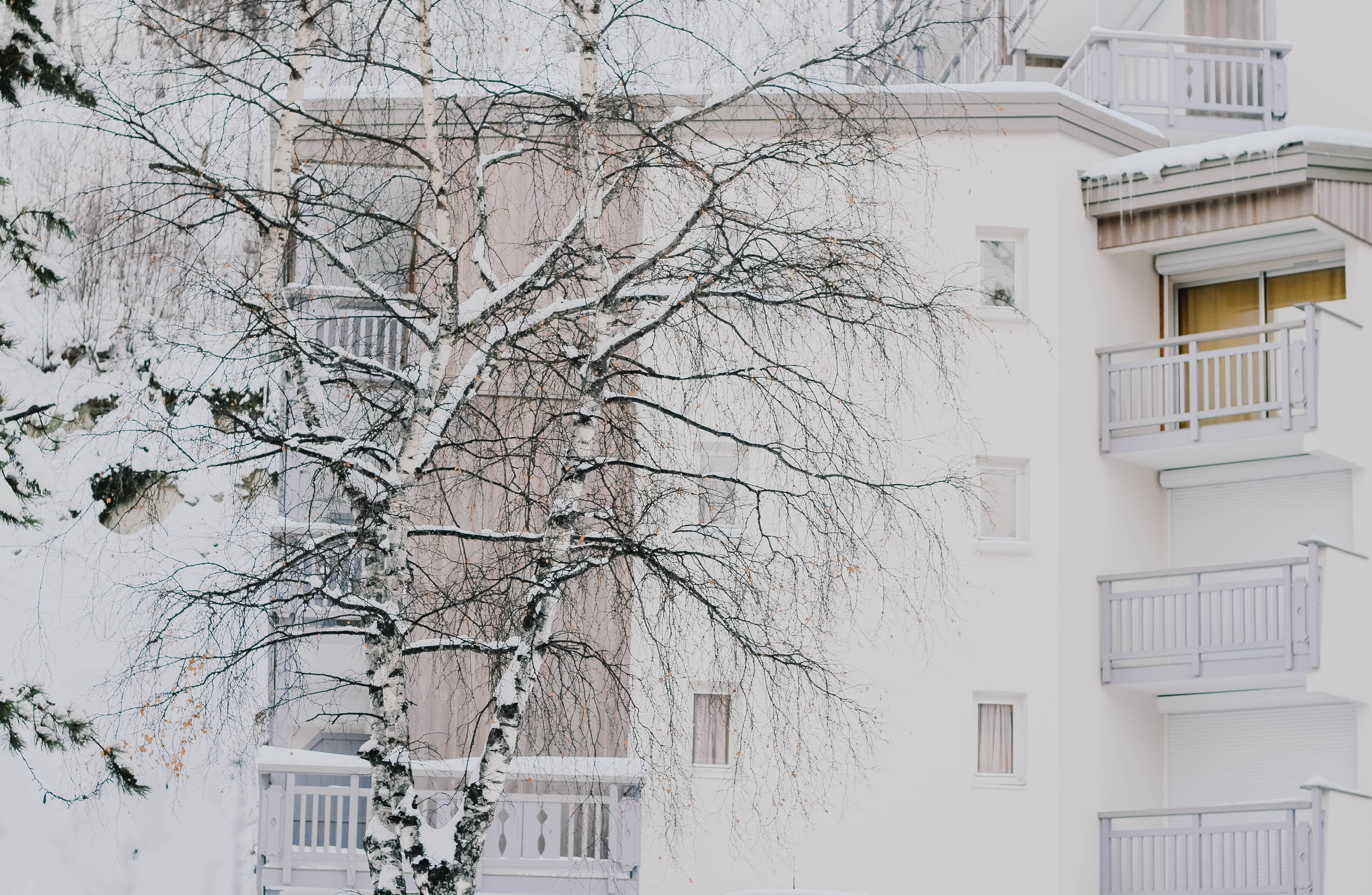 A snow covered tree in front of a white coloured apartment at Les 2 Alpes