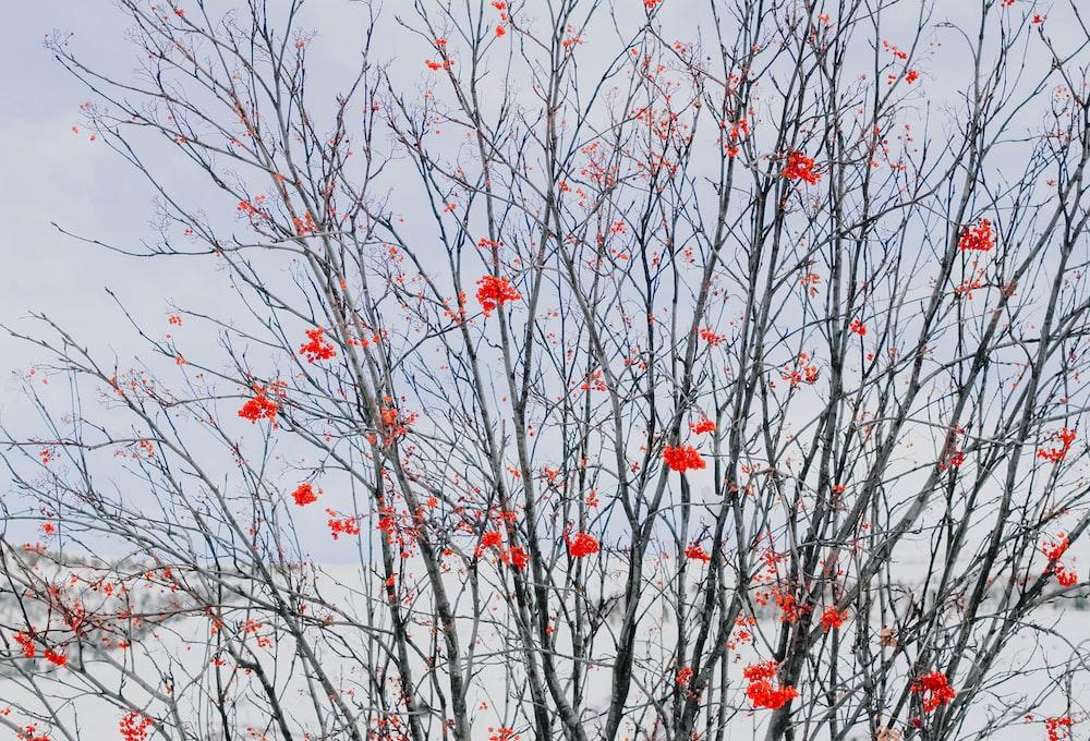 red petaled flower tree