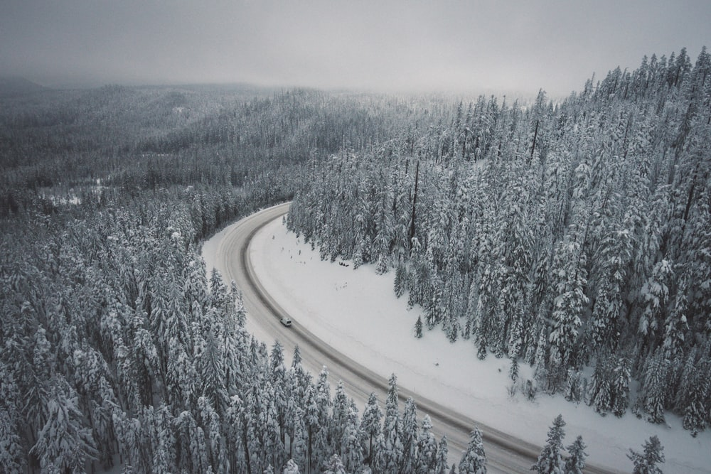 gray concrete road between trees covered with snow
