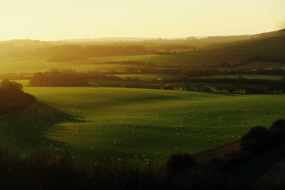 golden hour photography of grass field