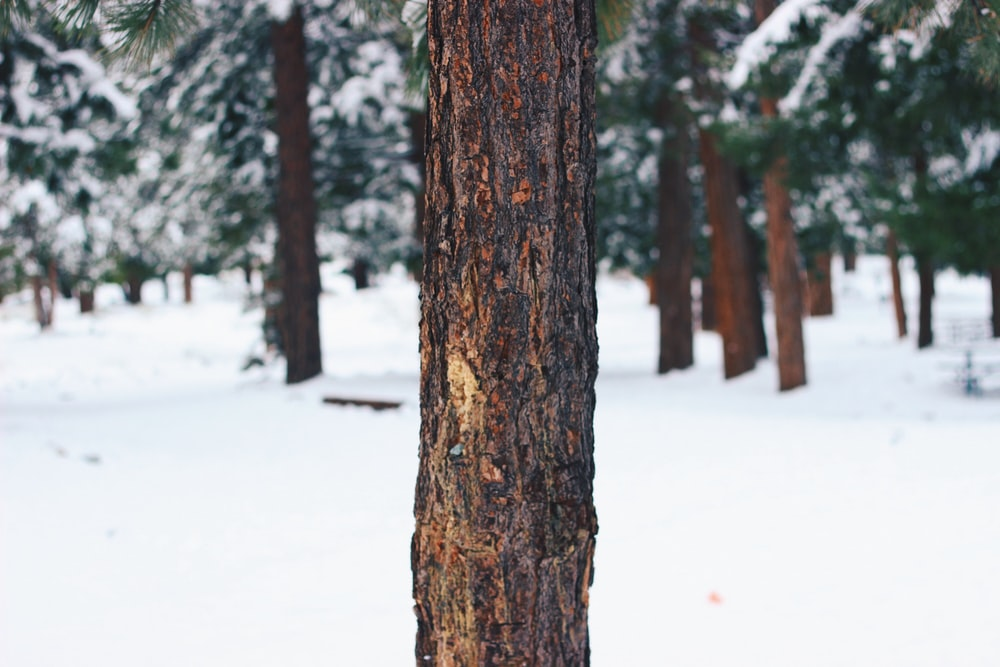 selective focus photography of tree bark