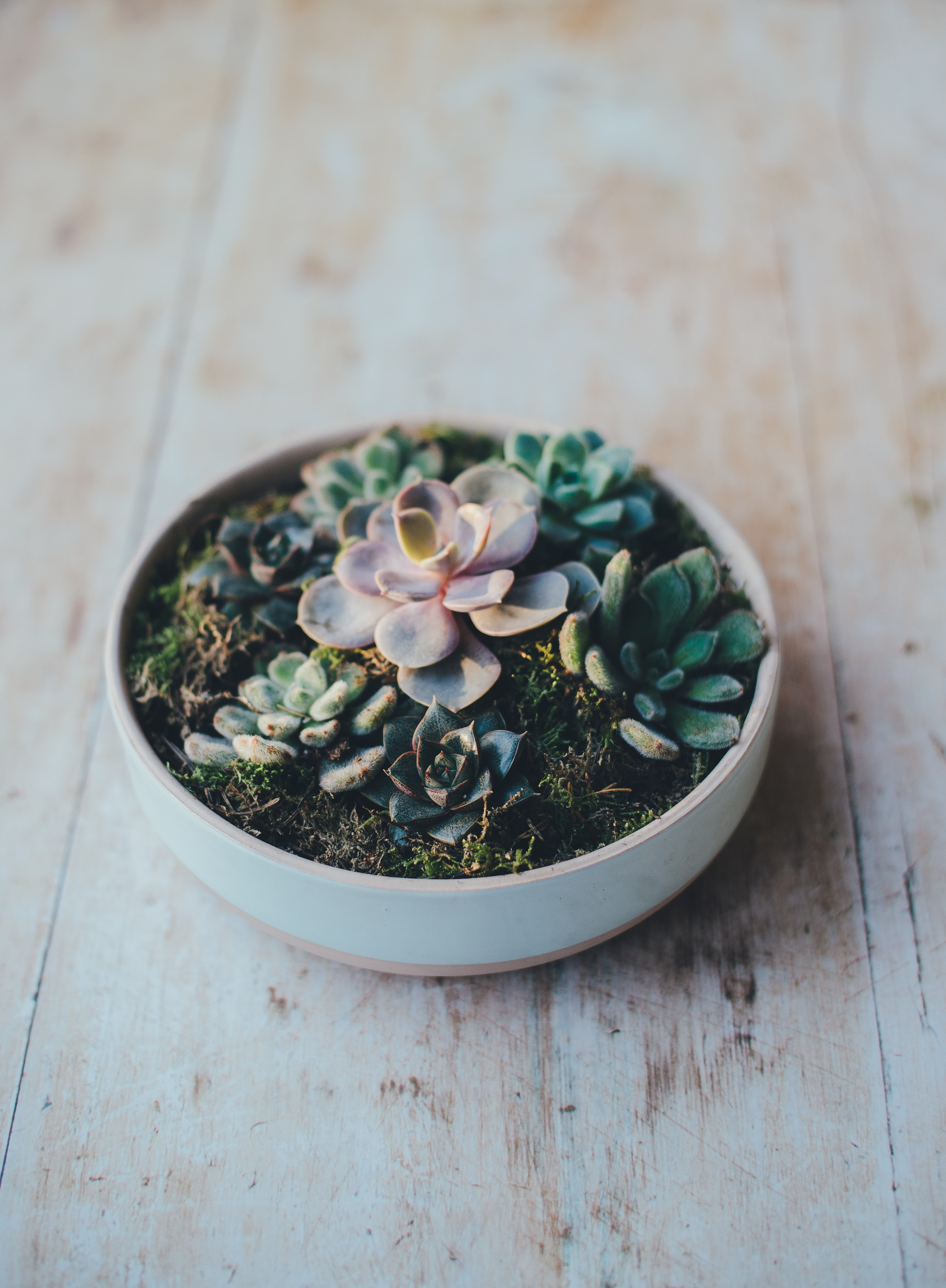 A bowl of succulents on a table
