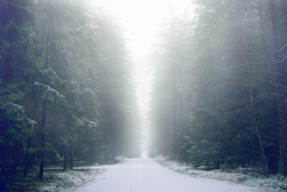 narrow road between trees