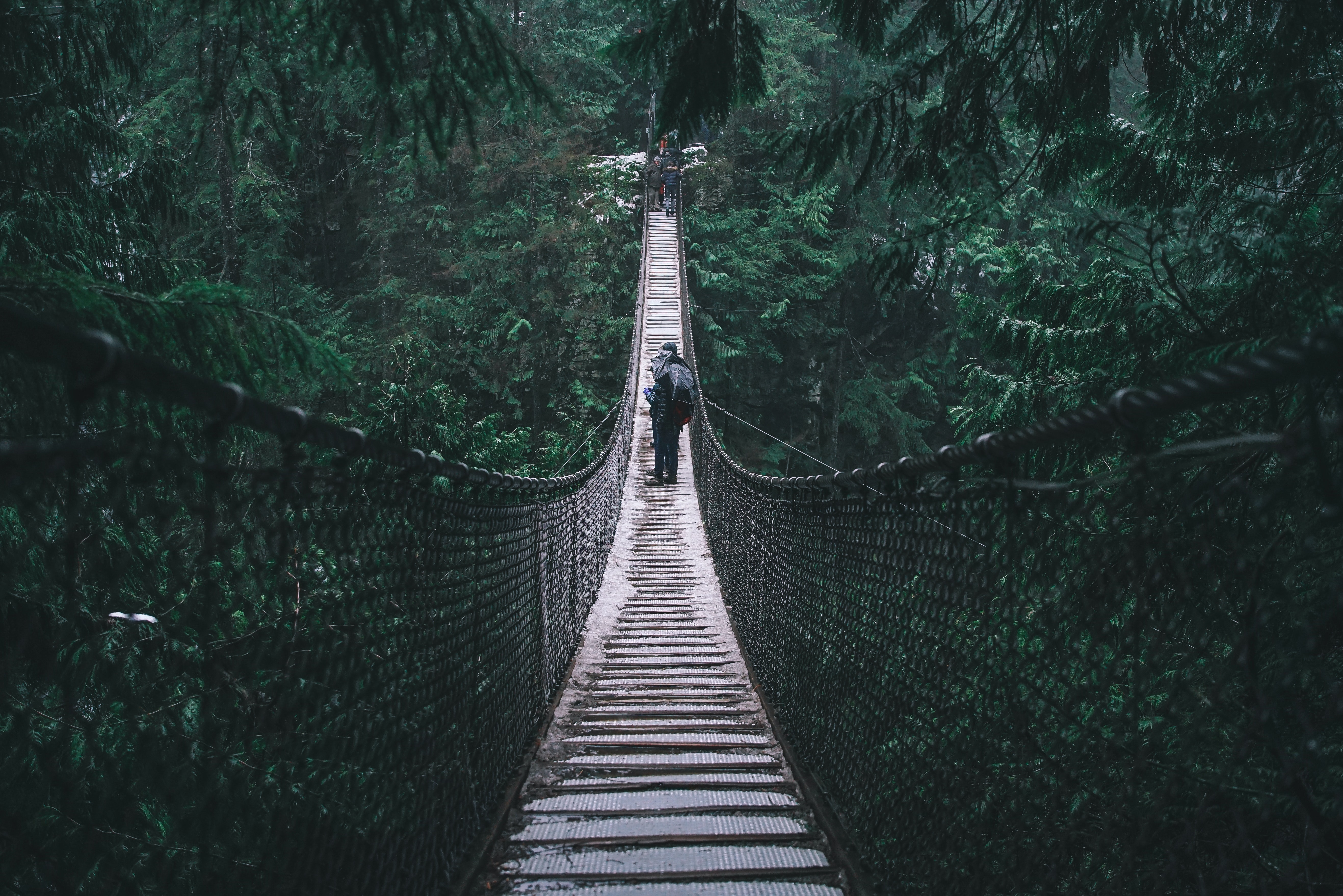 Several people on a suspension bridge in the middle of a lush forest