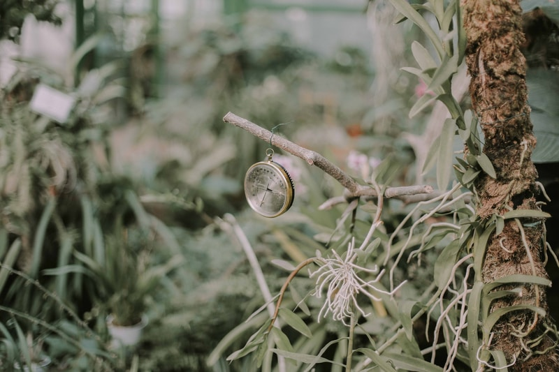 silver-colored pocket watch hanging on brown tree branch near grasses