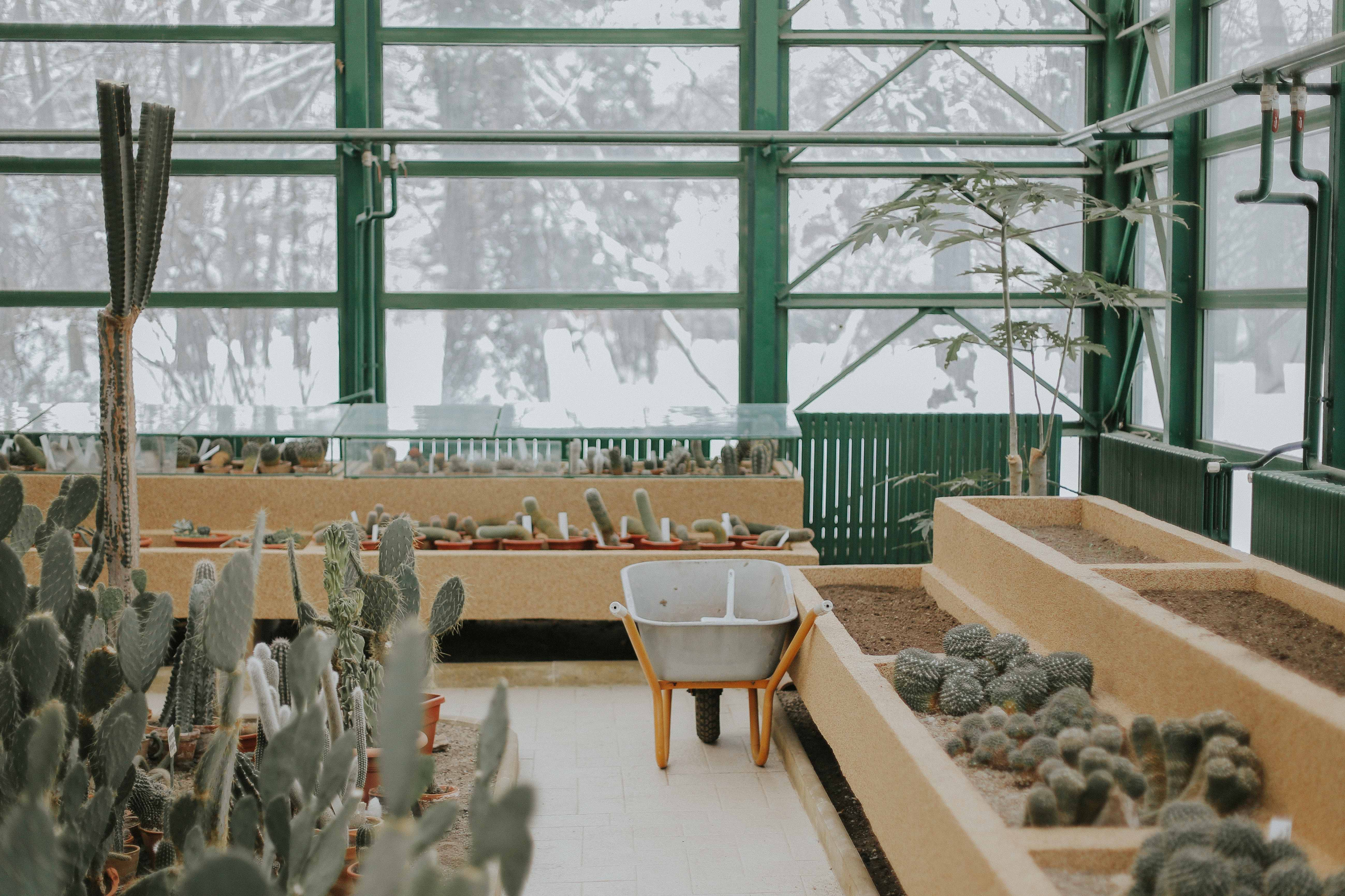 cacti inside greenhouse