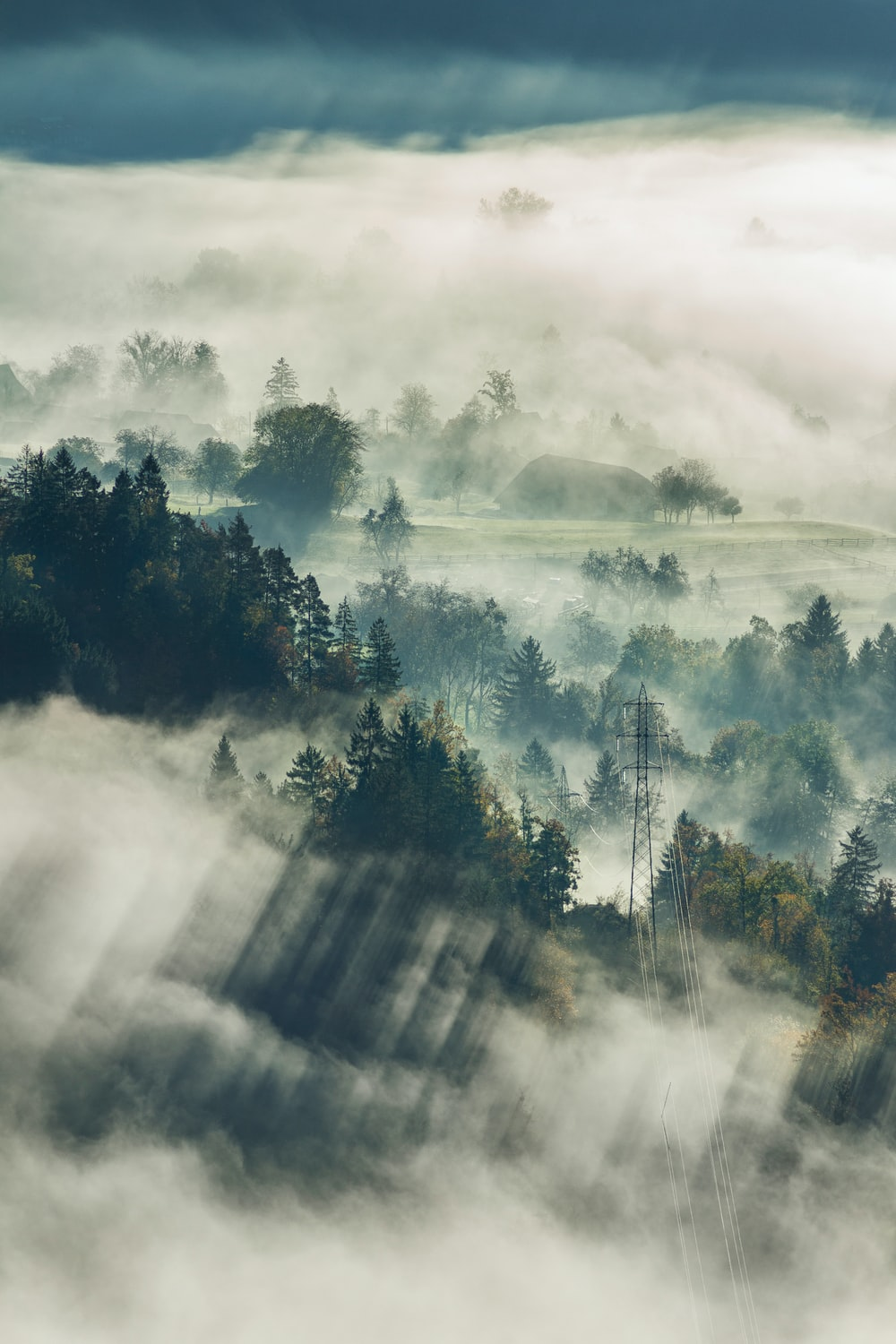 aerial photography of tall trees and house under foggy weather