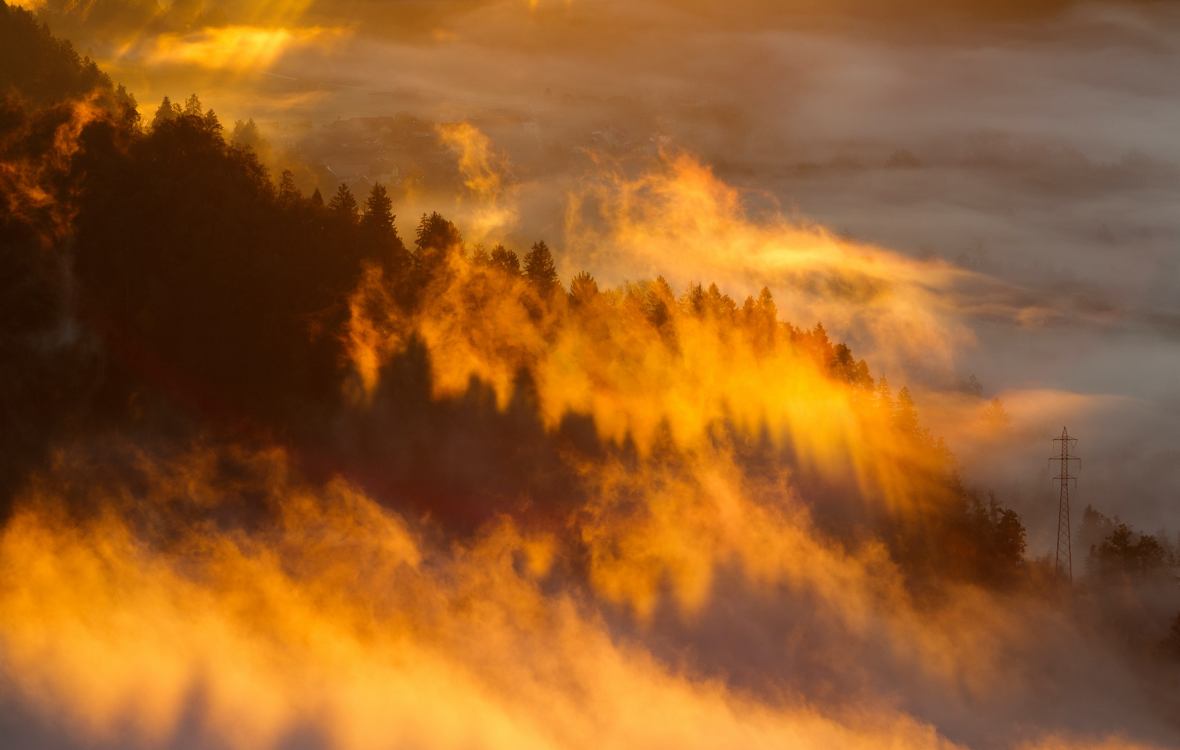 An evergreen forest surrounded by mist during sunset