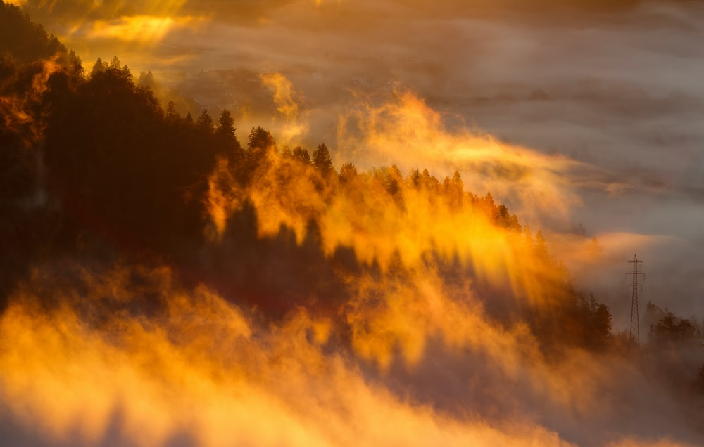 silhouette of trees with fog under orange sky