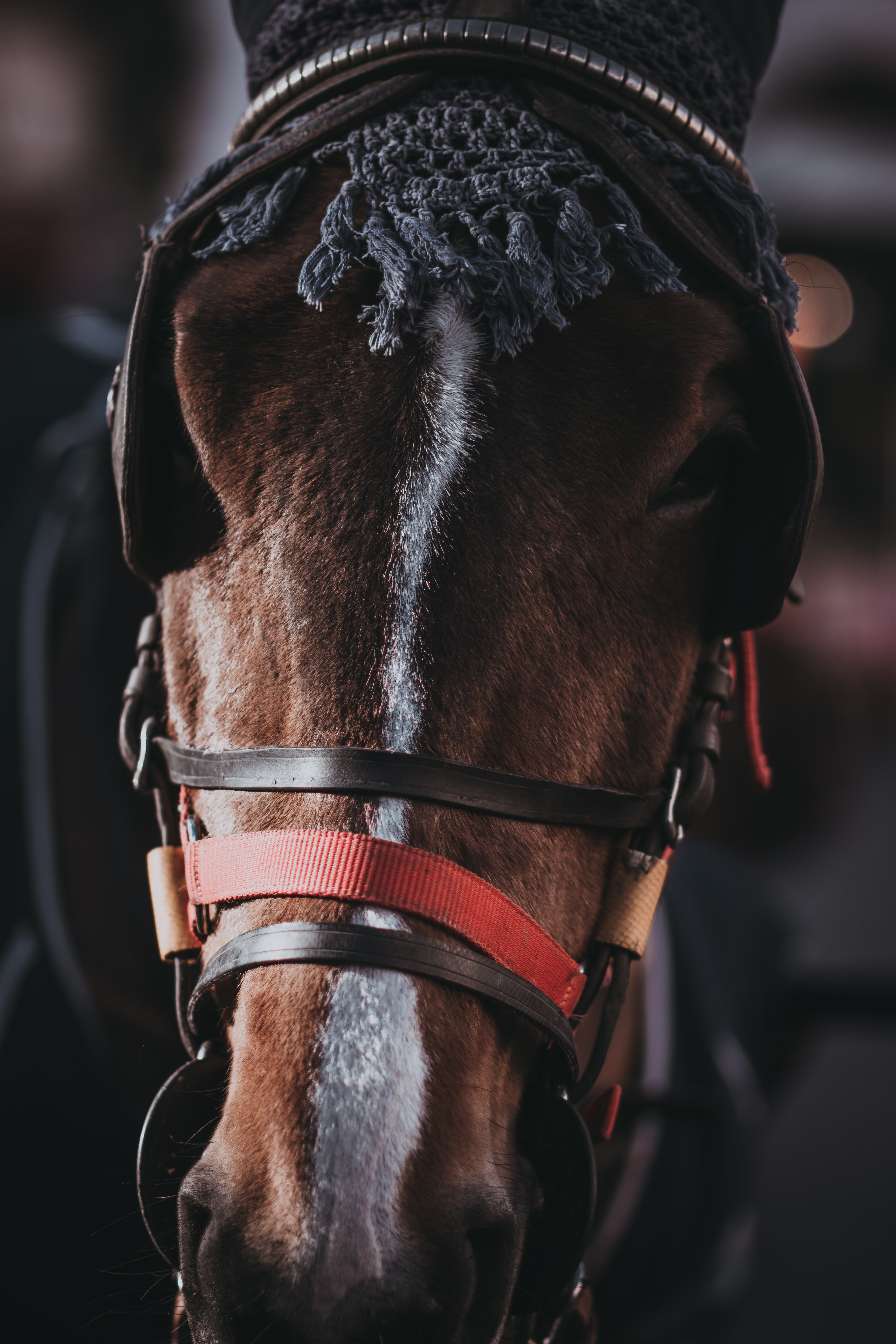 A close-up of the head of a horse with blinkers on