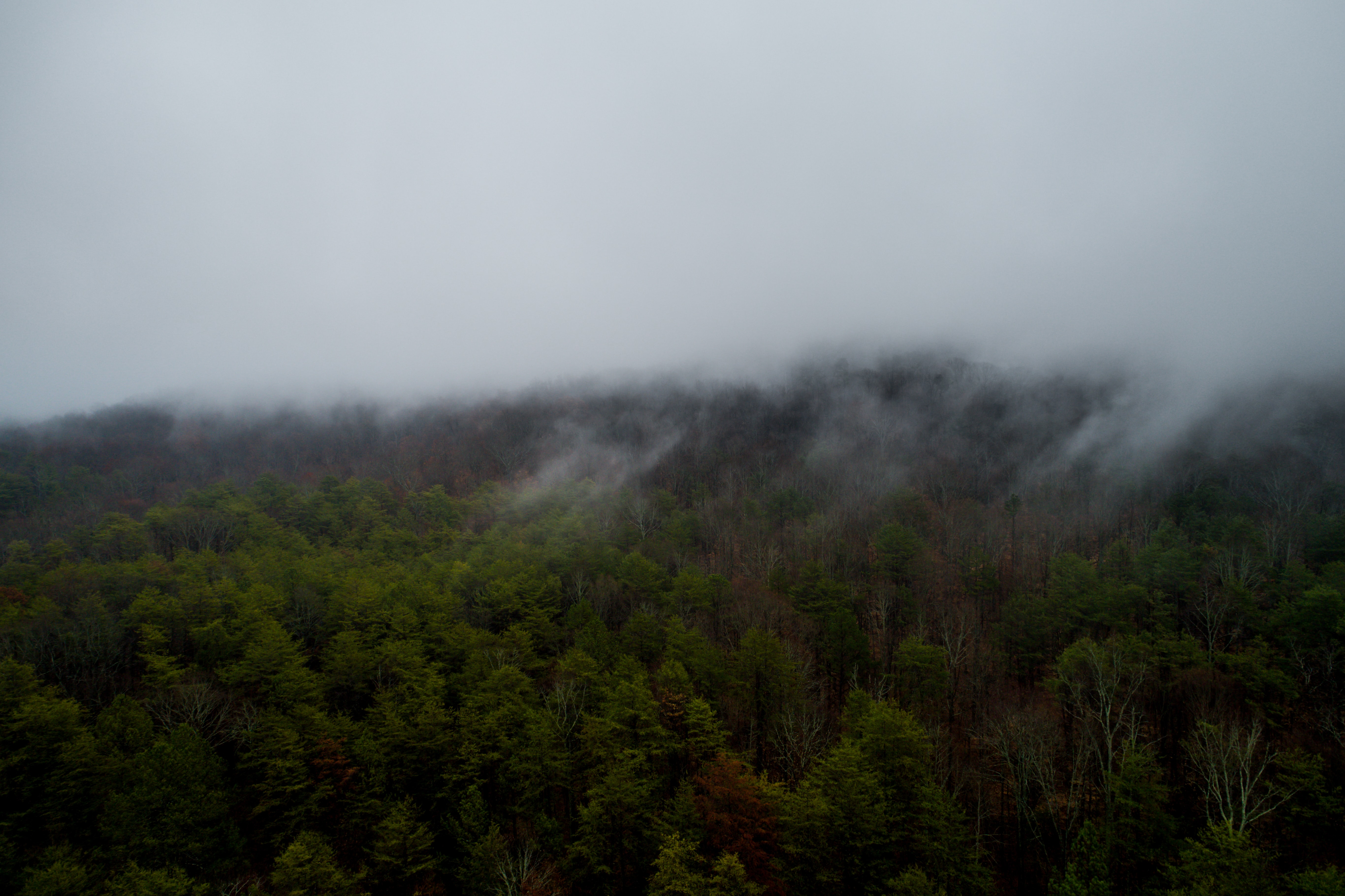 Fog over a forest with green and brown trees