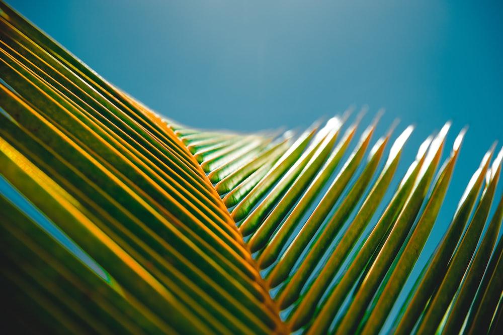photography of banana leaves