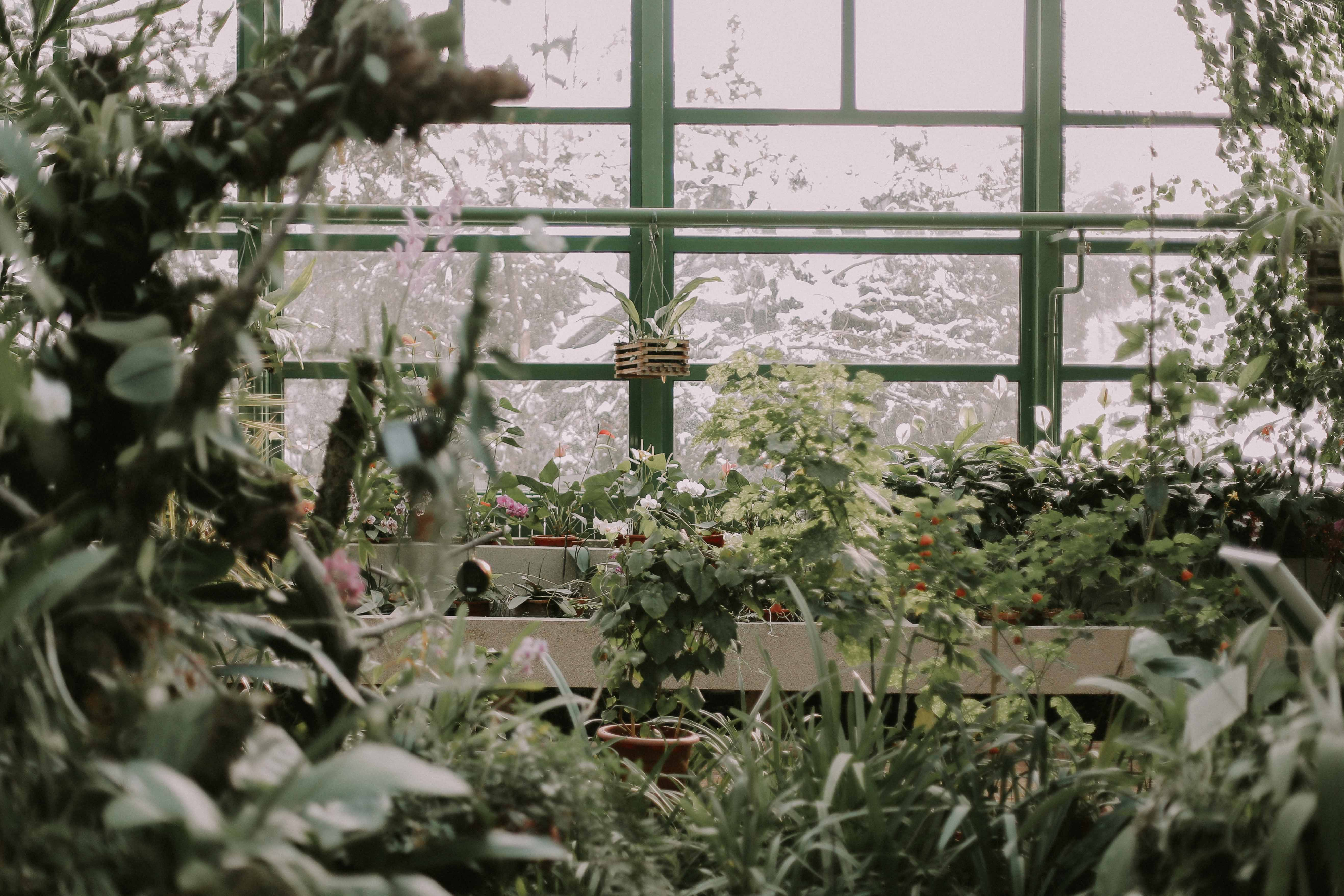 The inside of a greenhouse with lush green vegetation