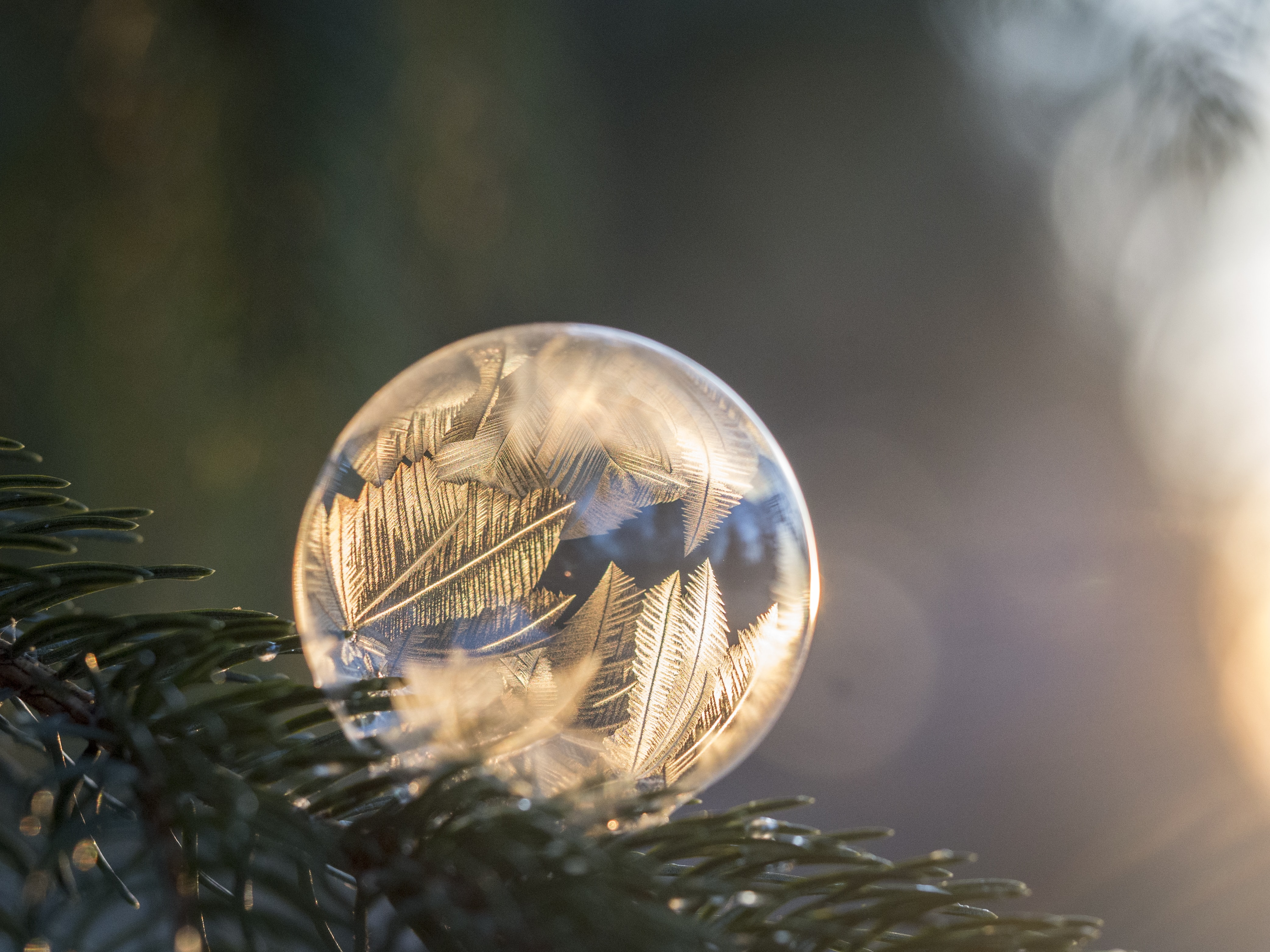 A frozen bubble rests on a pine branch while sun illuminates its icy patterns