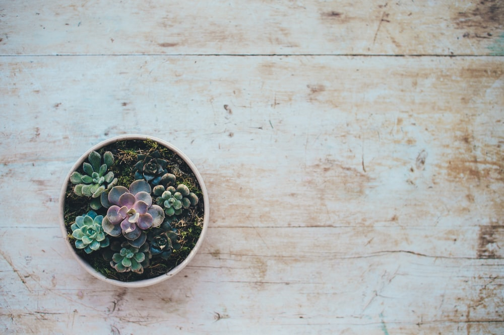 top view photo of succulent plants