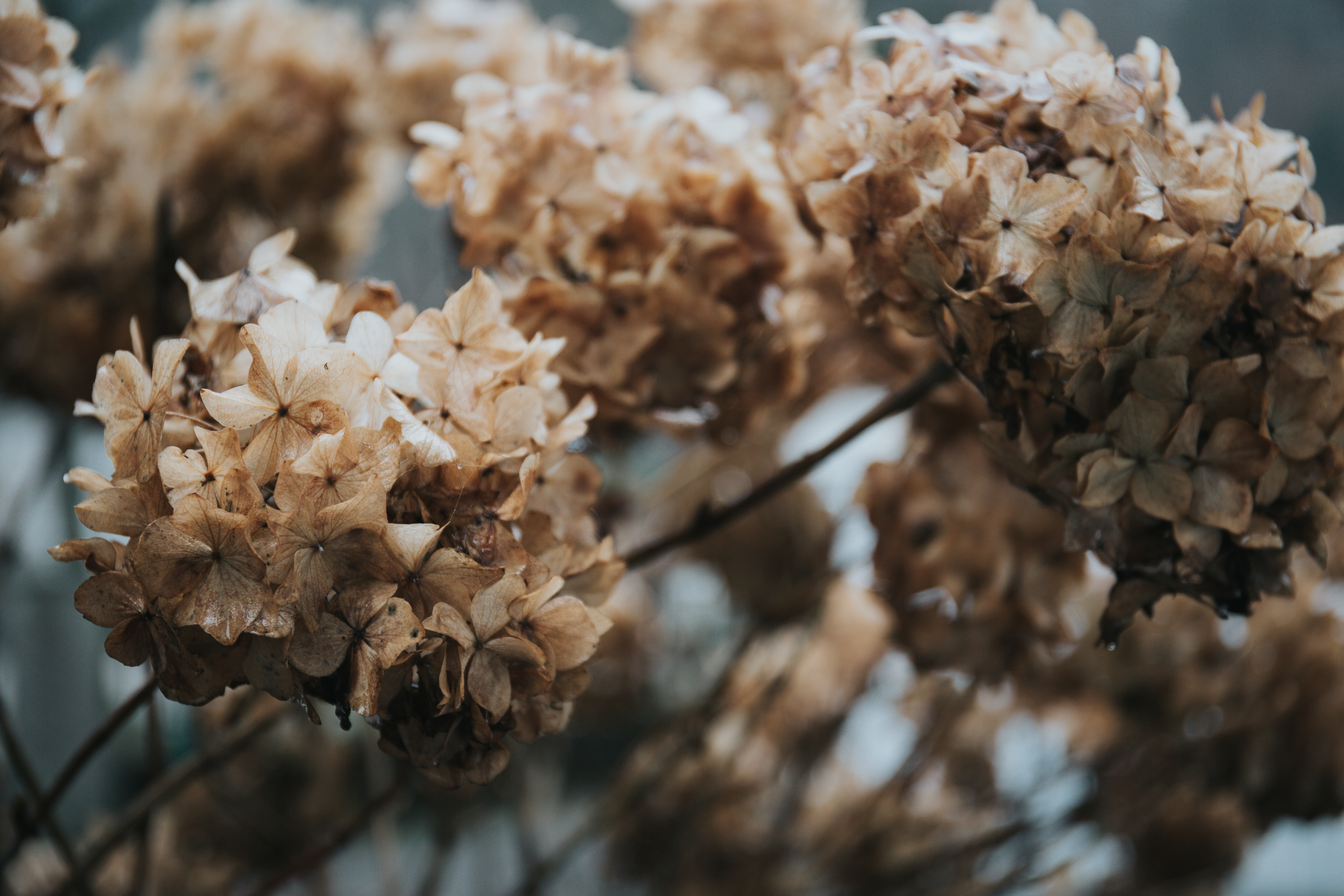 shallow focus photography of brown-and-white flowers