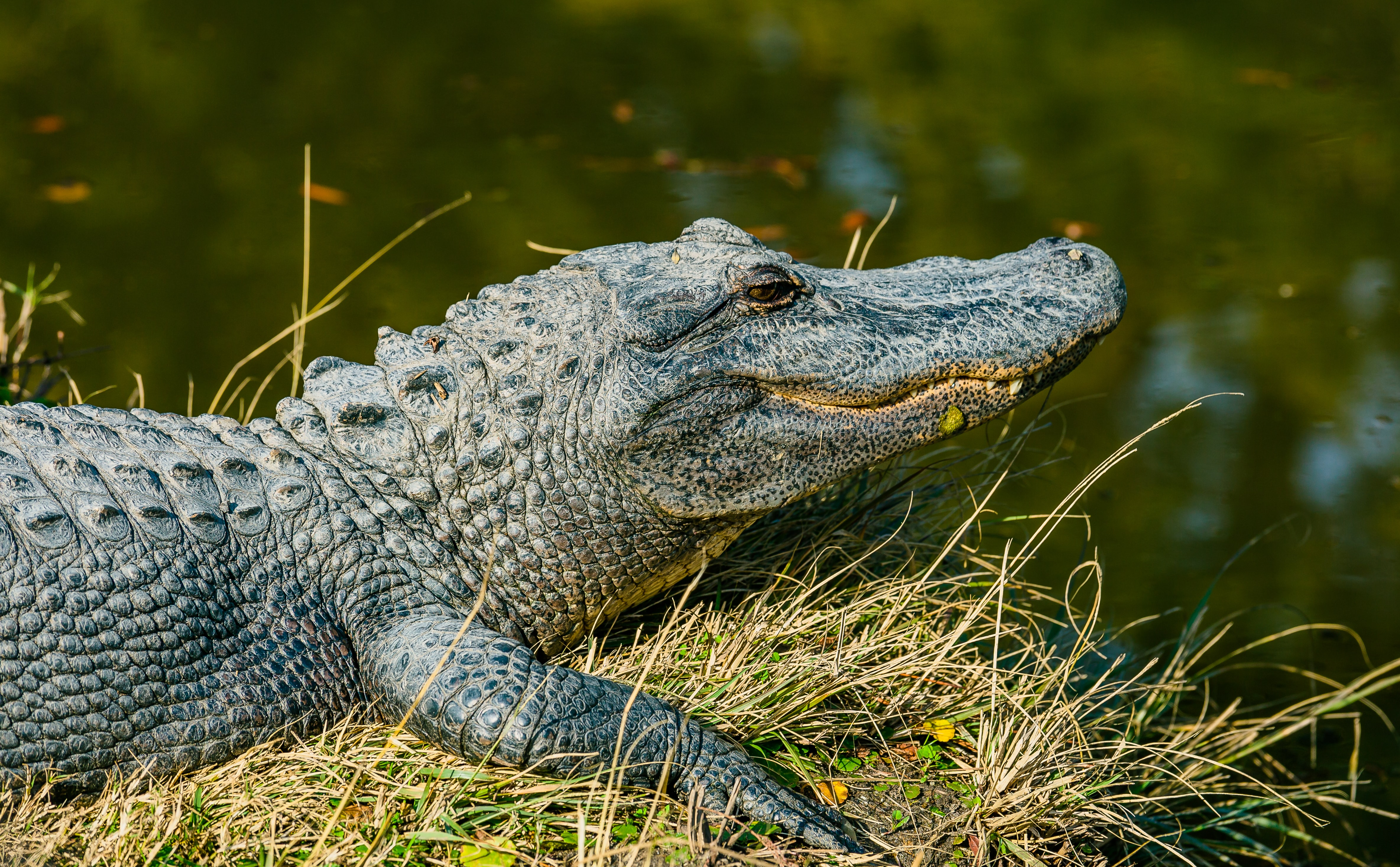 Crocodile life stories