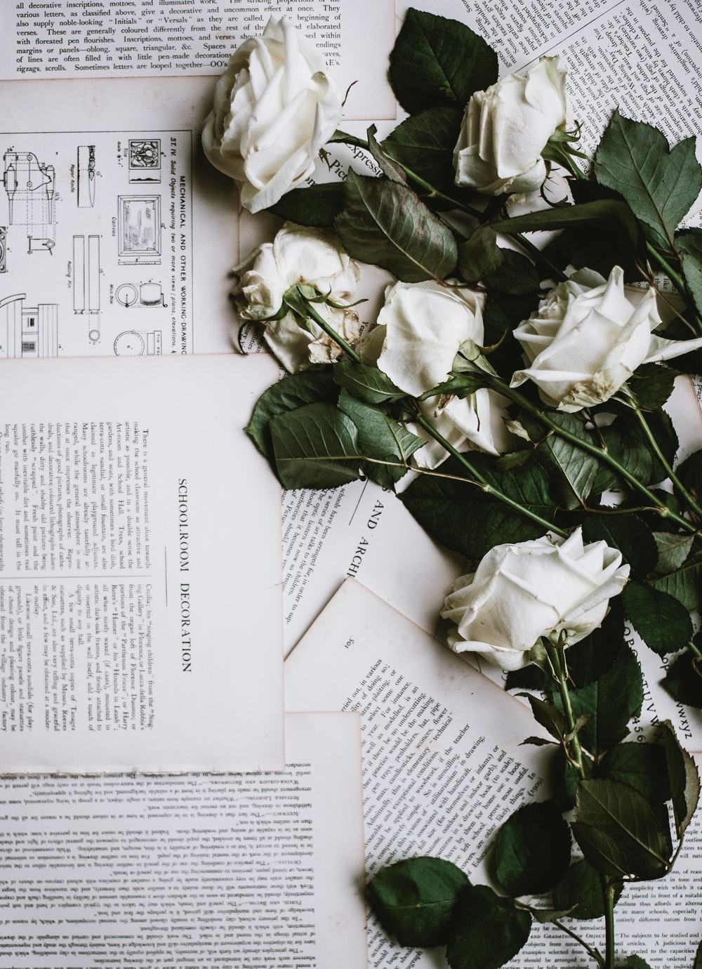 six white roses on white printer papers