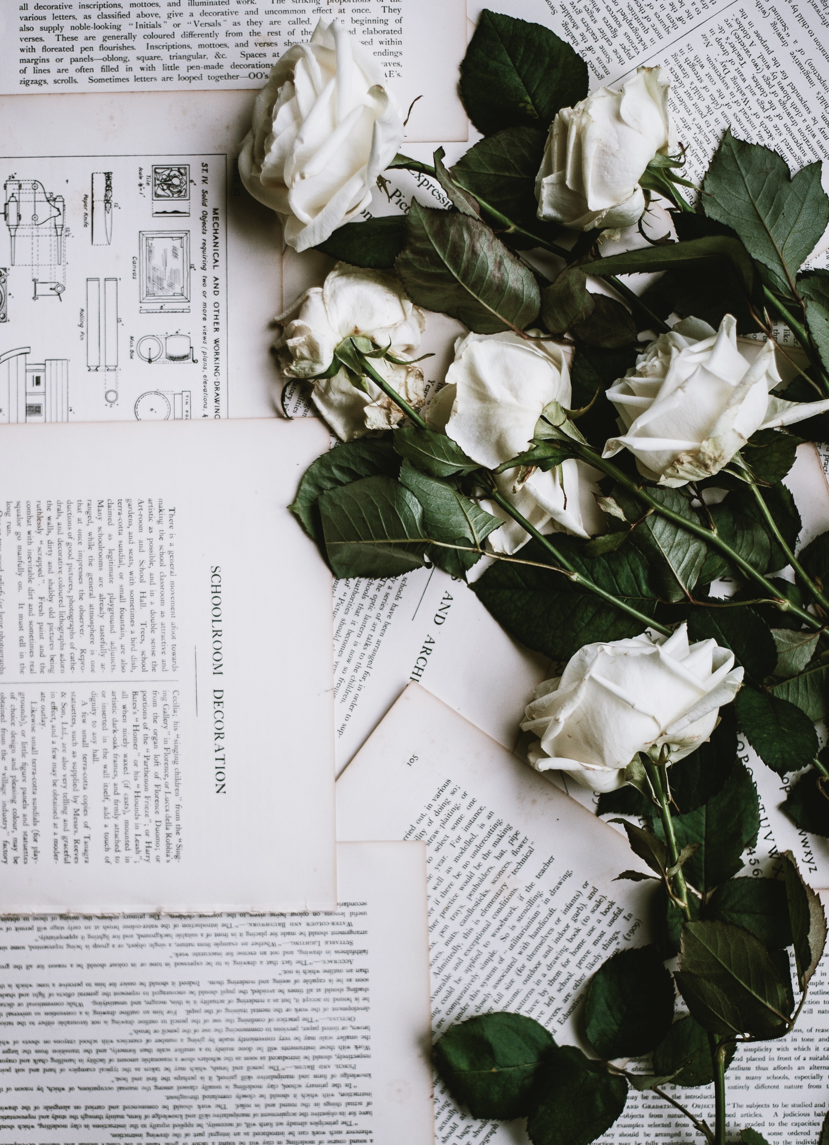 White roses laid out on torn out book pages