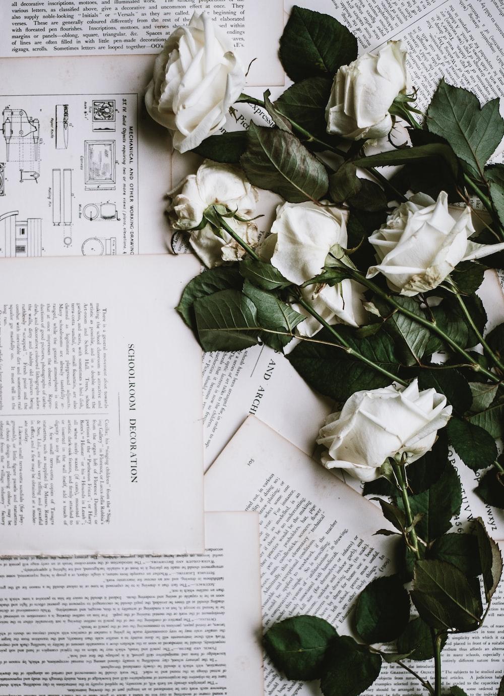 Roses Photo By Annie Spratt Anniespratt On Unsplash