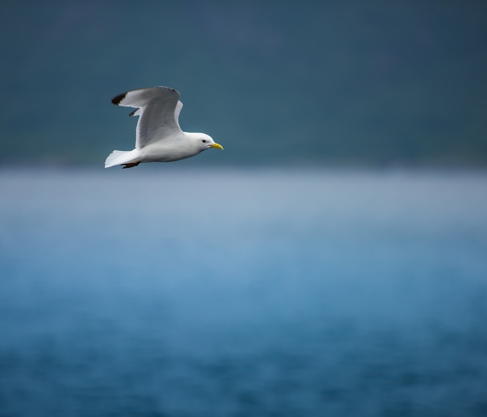white gull flying over the sea during daytime