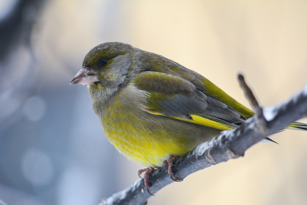 green bird in shallow focus