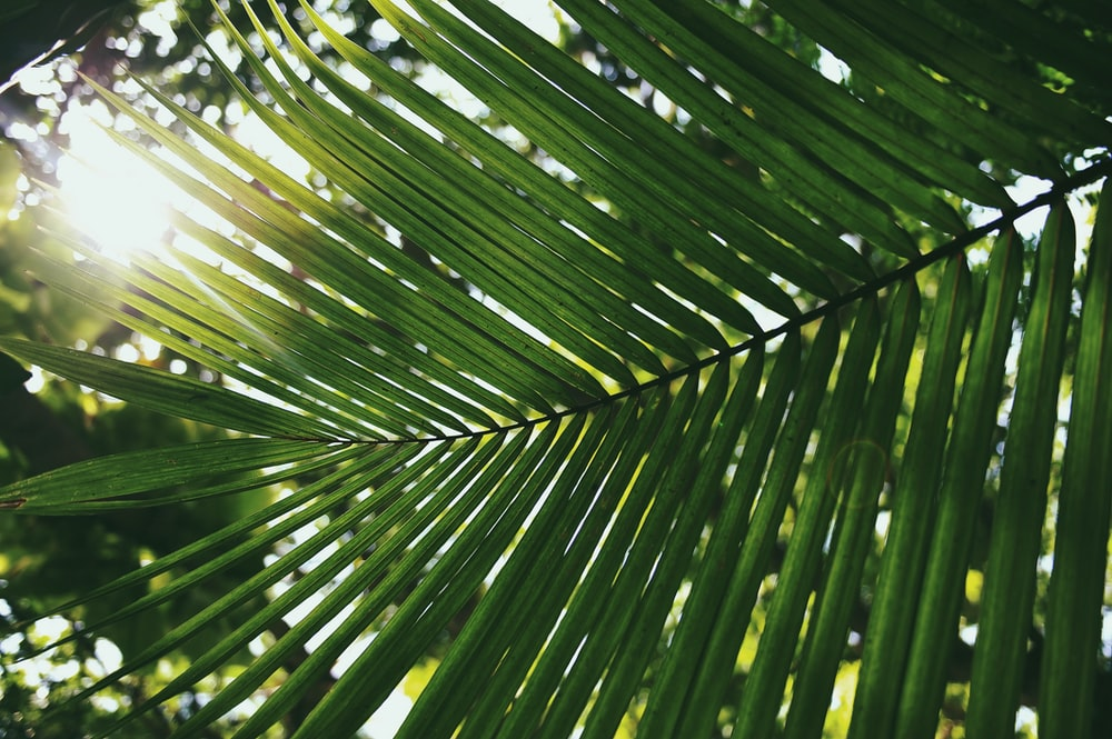 palm leaf covering shade of sun