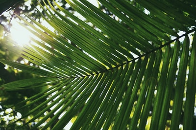 palm leaf covering shade of sun tropical zoom background