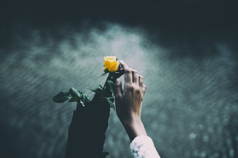 focus photo of person holding yellow rose