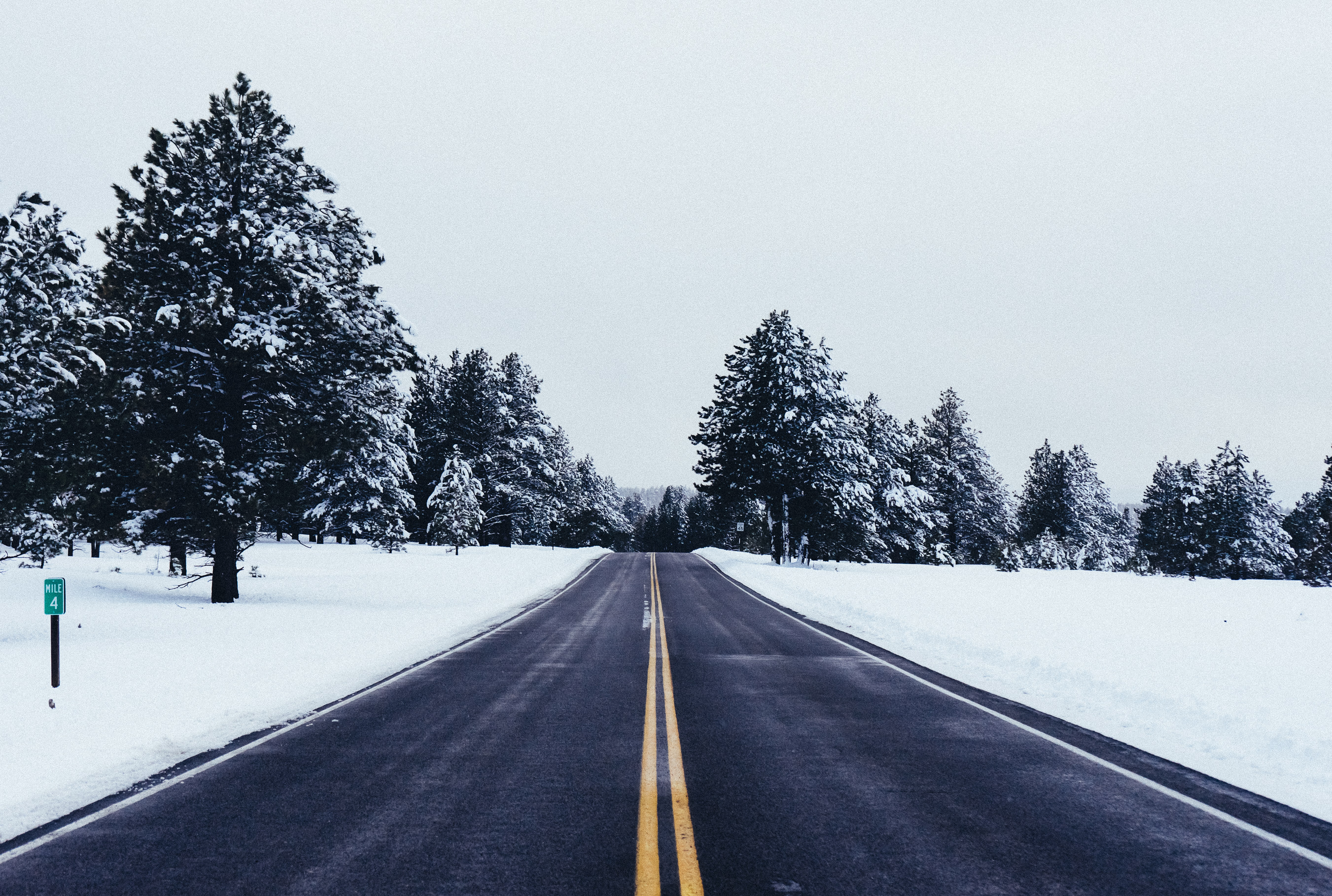 empty road near trees covered in snow at daytime