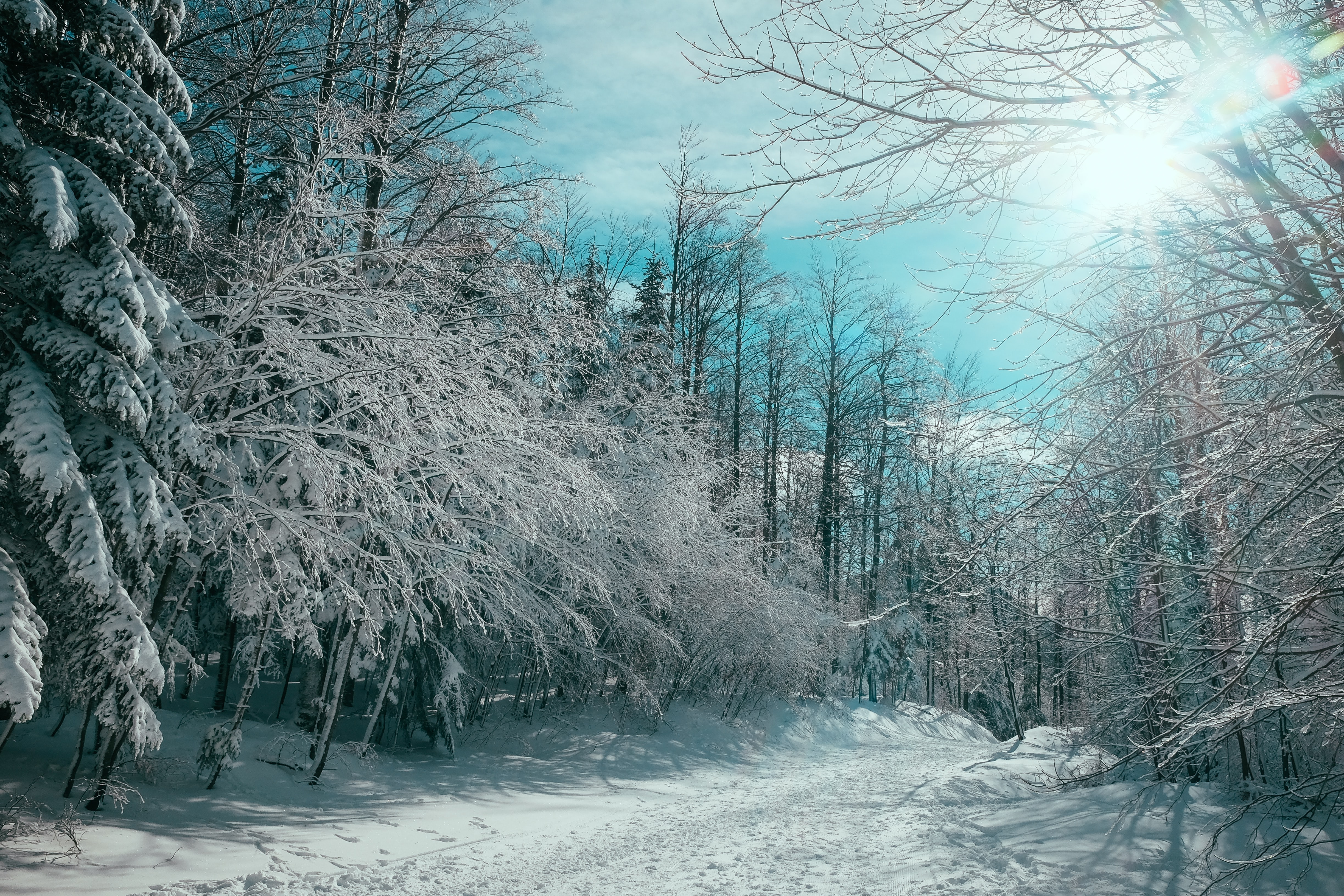 Snow covered road through the forest on a sunny day in Winter