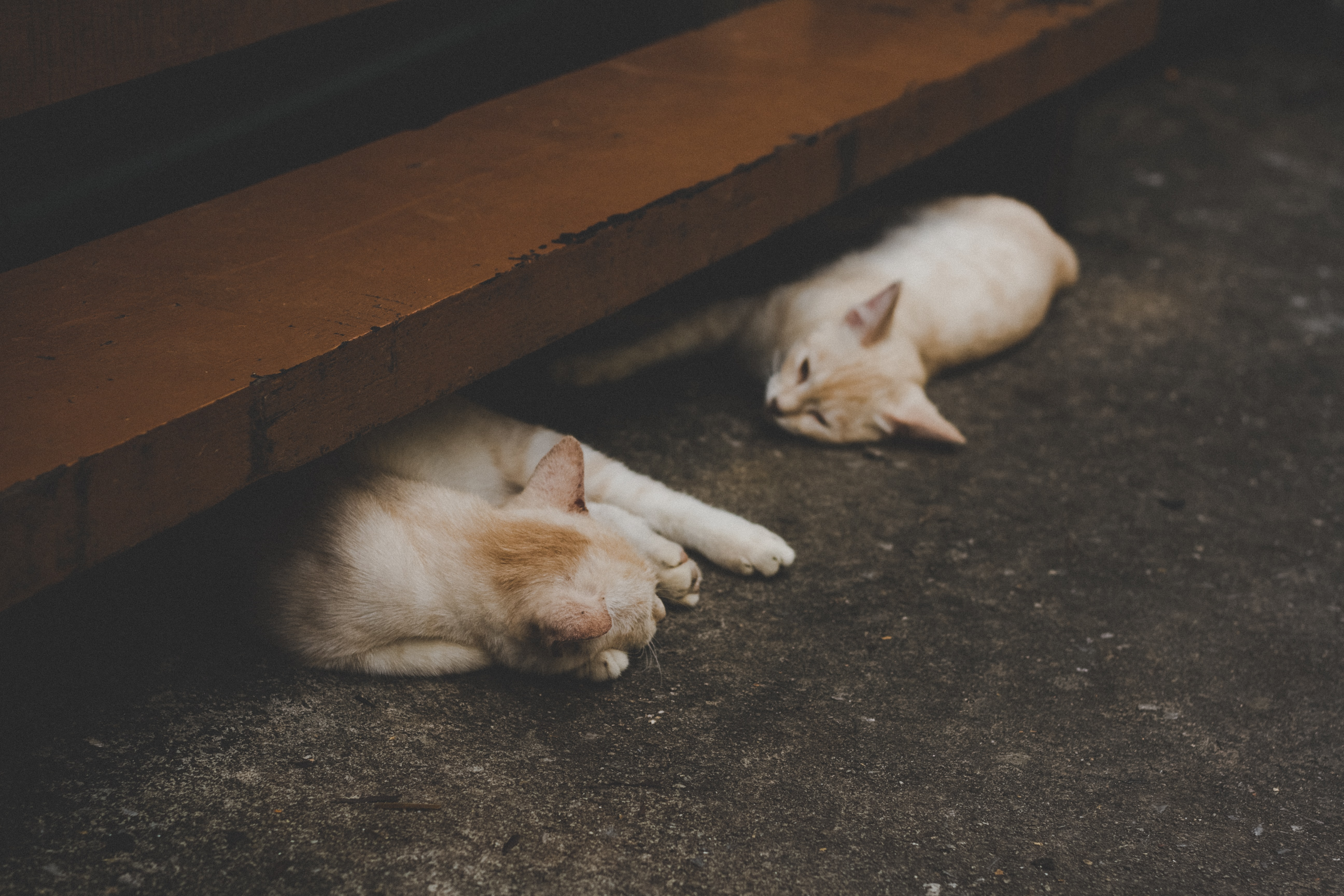 Two white cats napping under wooden stairs