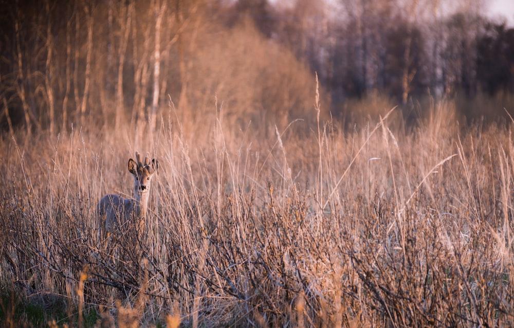 deer standing on grass field