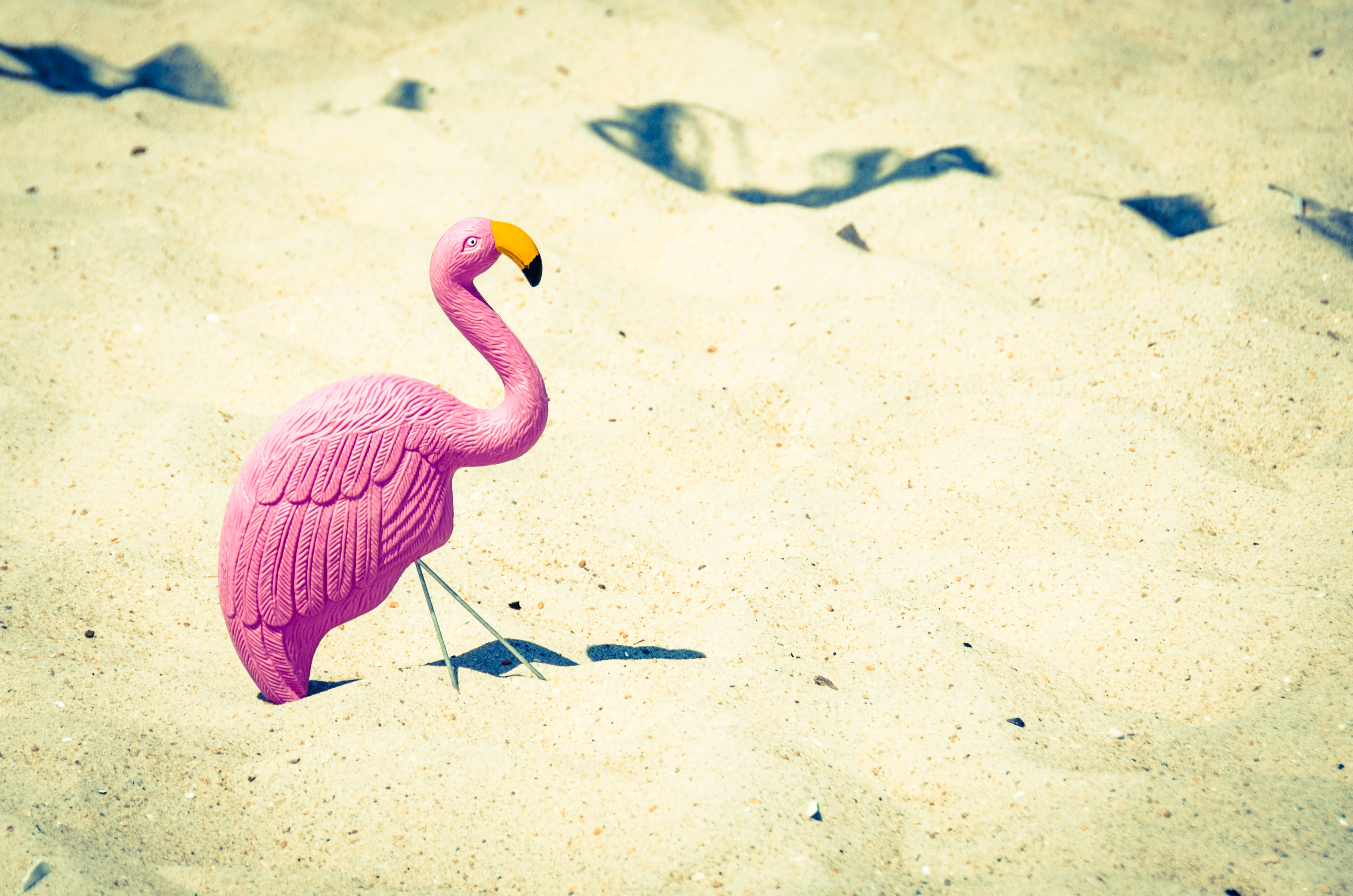 A pink wooden flamingo sticking out of the fine beach sand