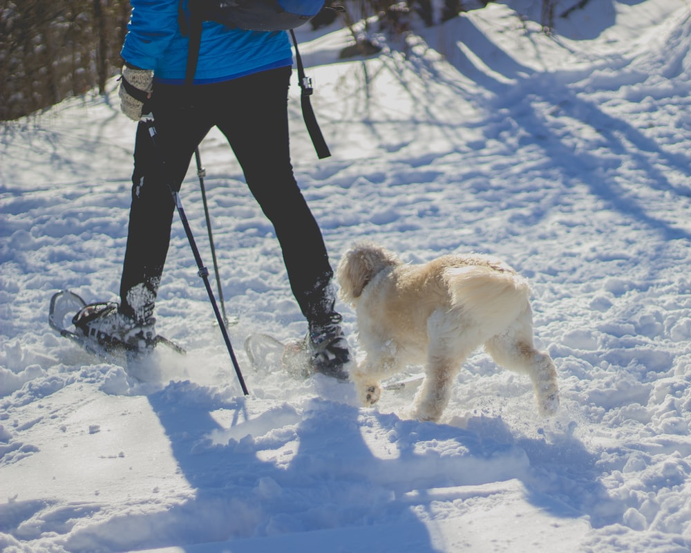 person walking in front of white dog on snow covered ground during daytime