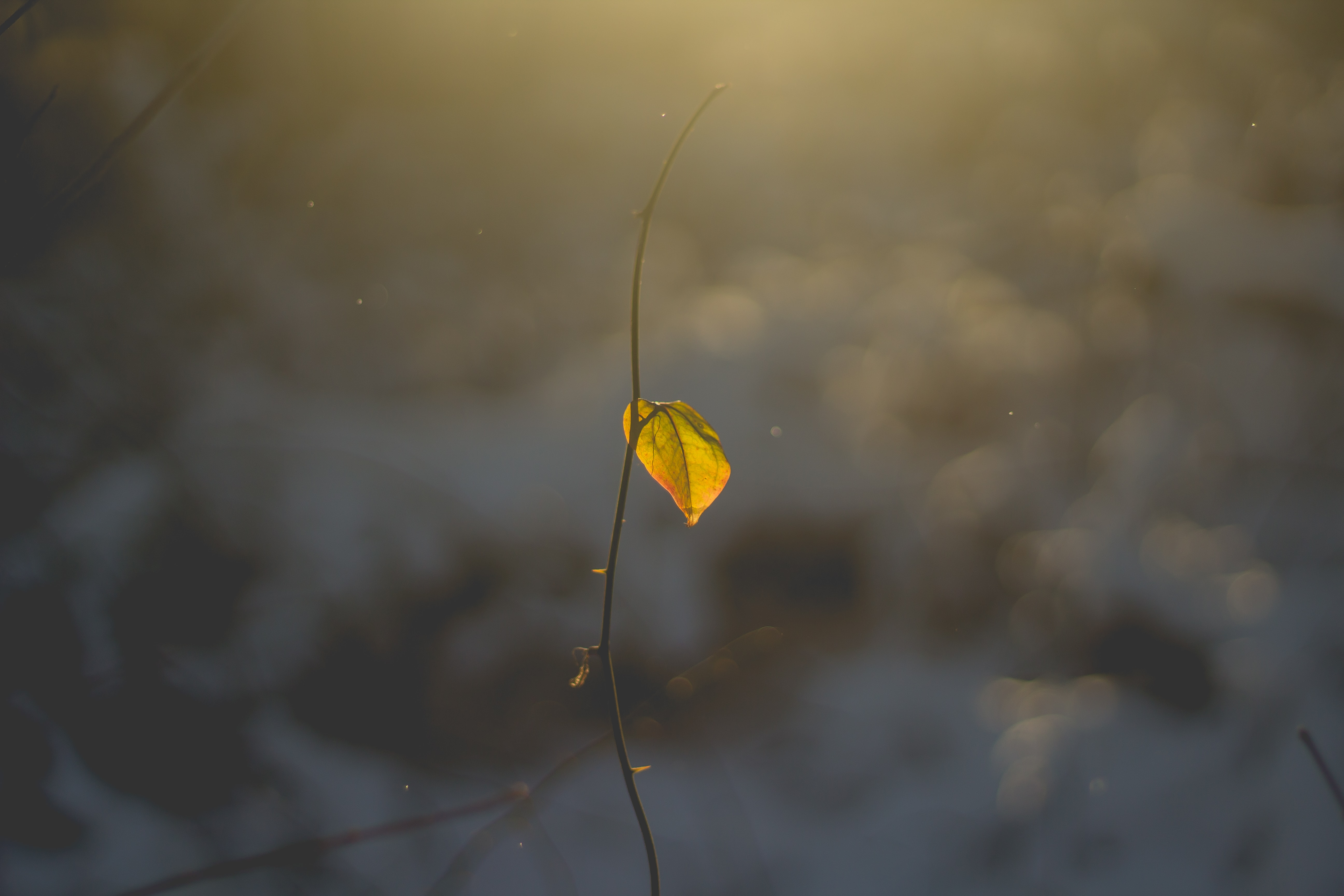 close up photo of withered plant with yellow leaf