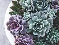 Succulents succulents stories