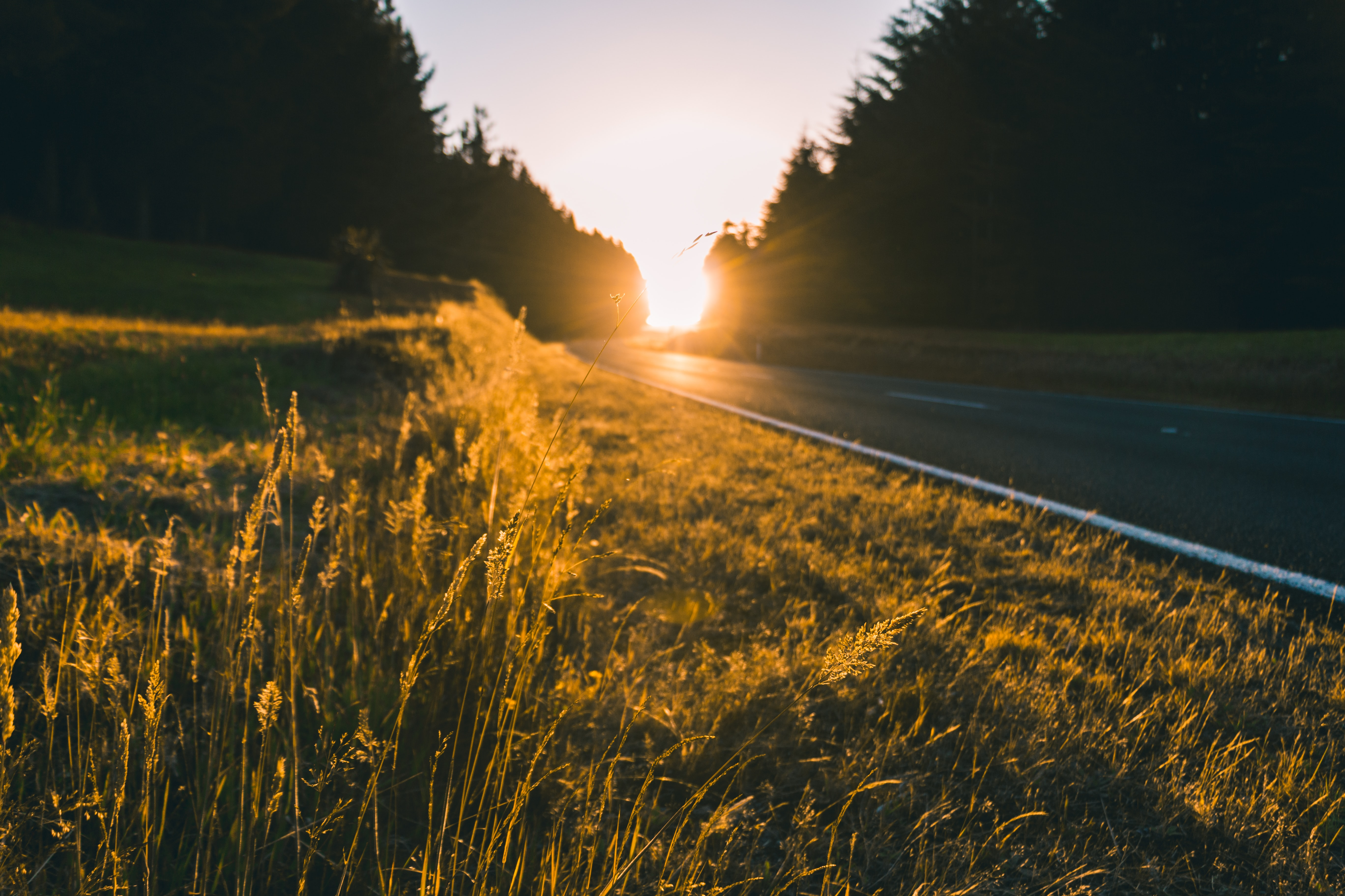 A road surrounded by long grass in Tongariro Holiday Park during golden hour