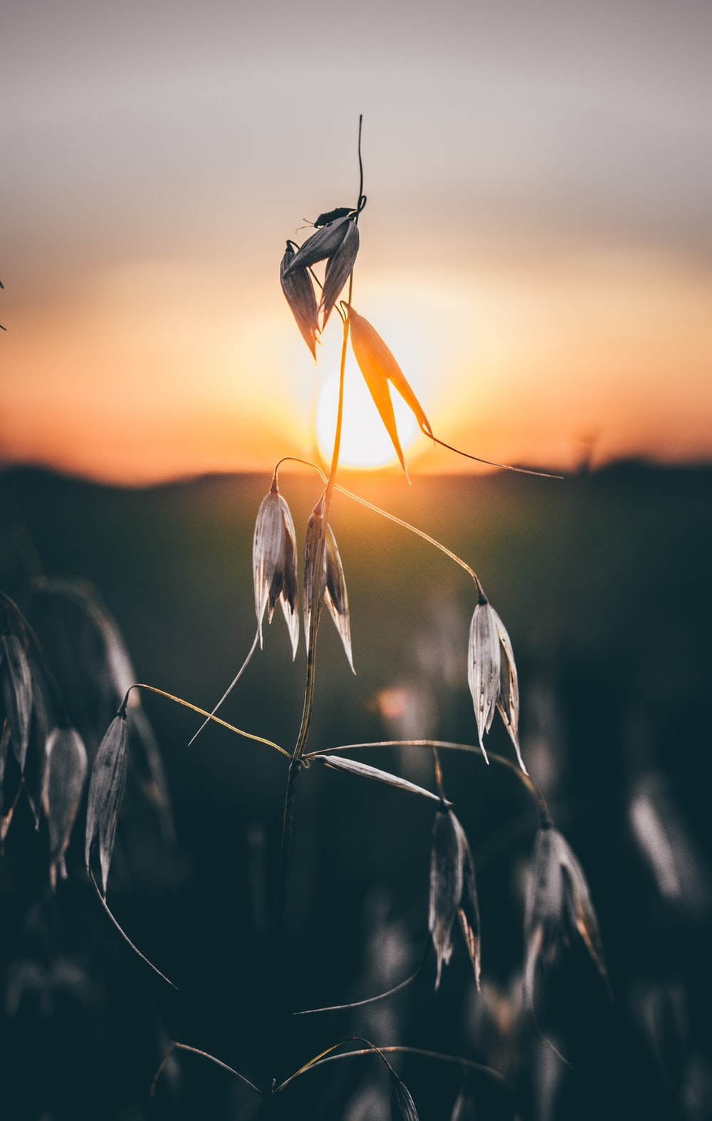 close-up photography of gray leaf plant during sunset