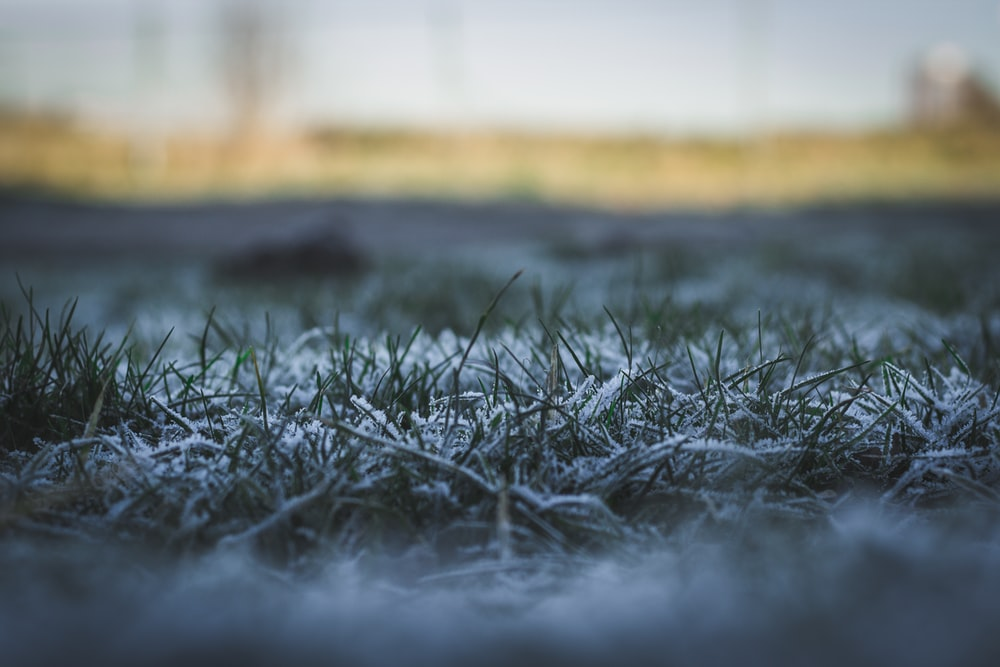 snow covered grass plant selective focal photo