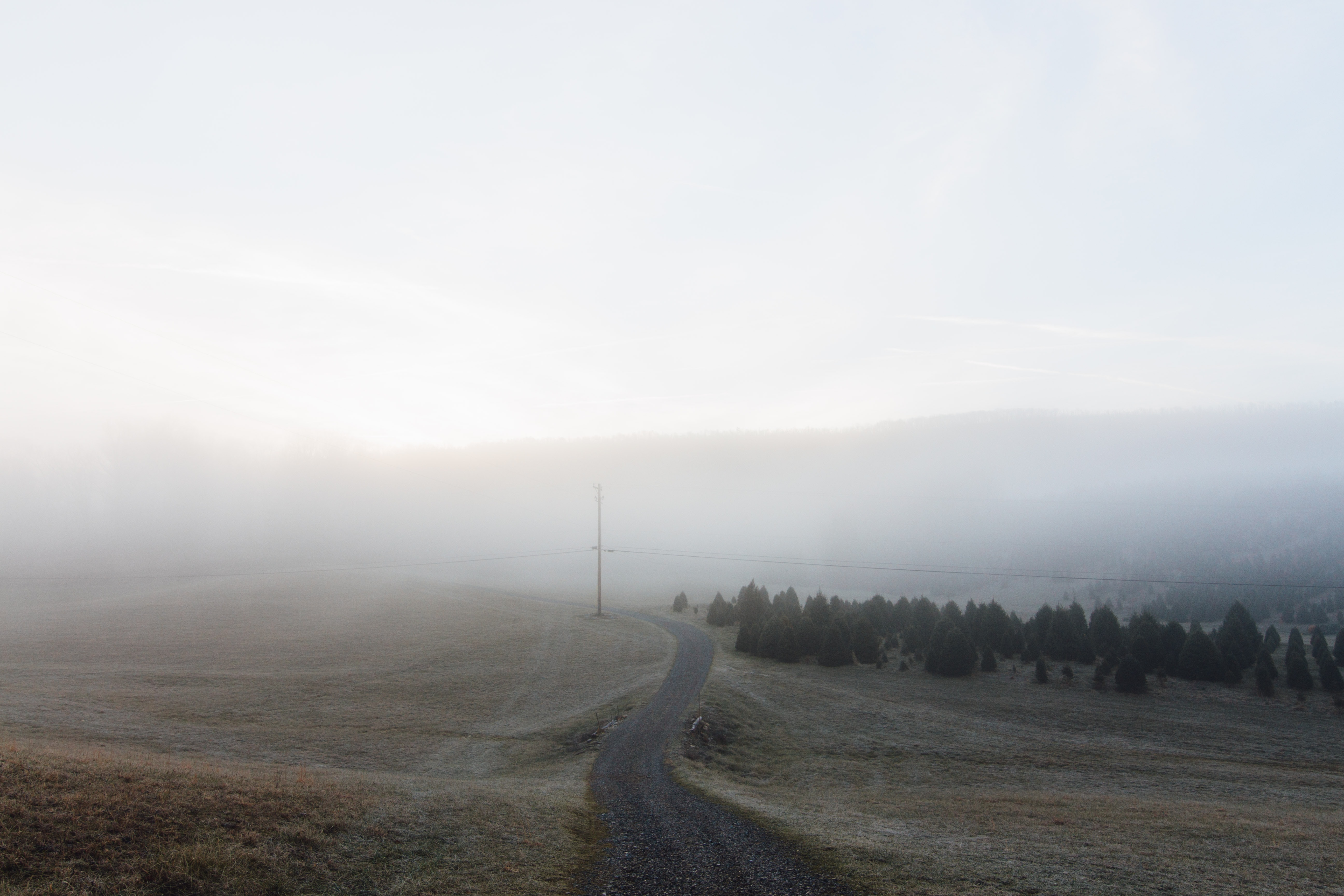 Rural road near farm field and pine trees on a foggy morning