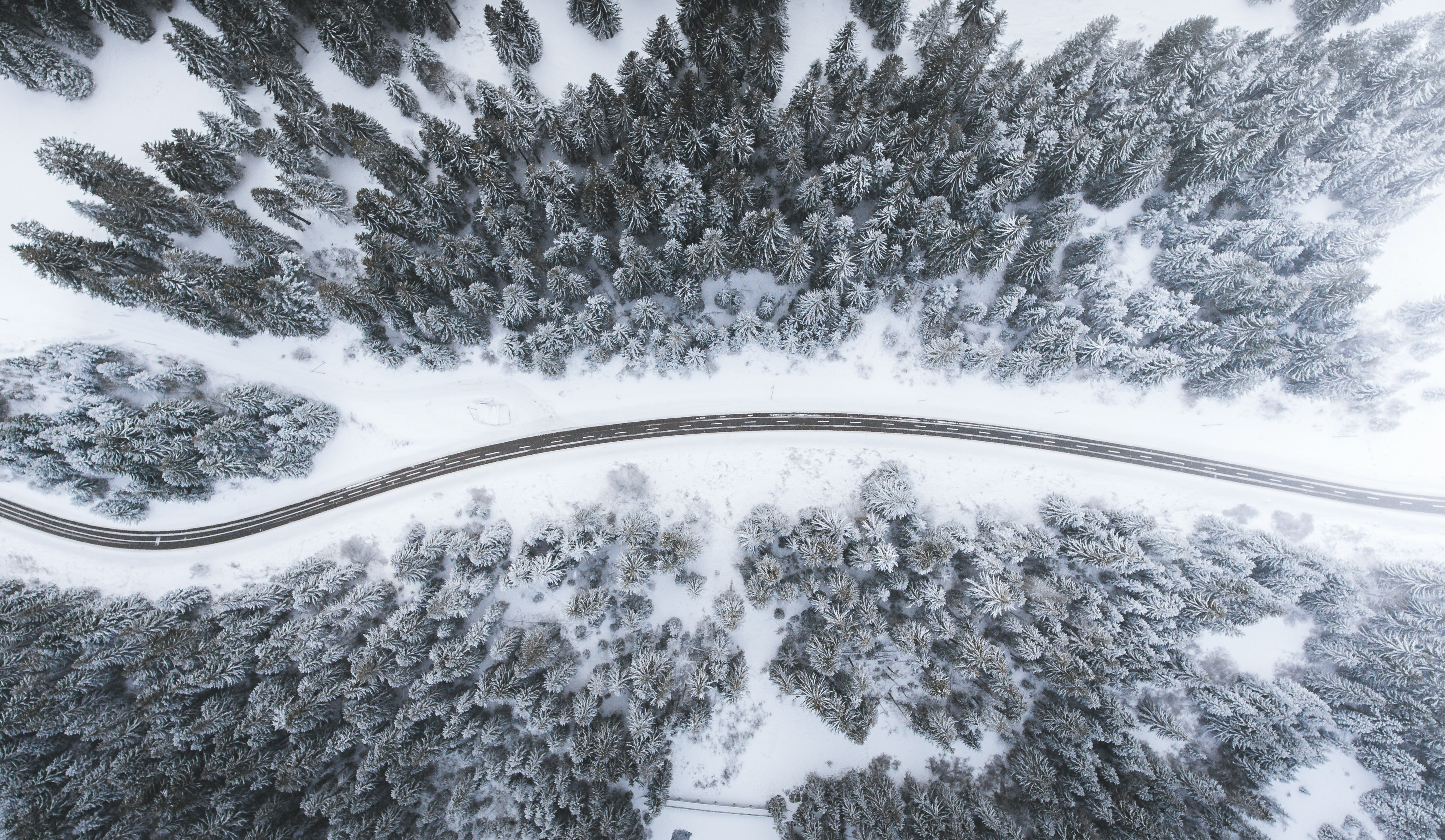 A drone shot of an empty road with stretches of snowy trees on its sides