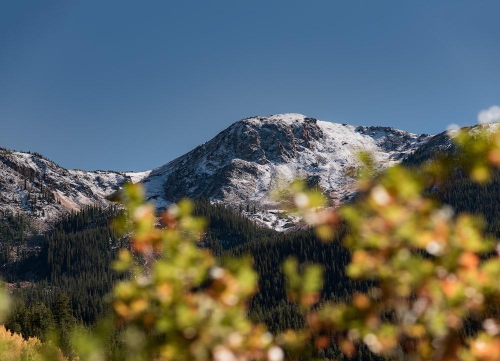 snowy mountain near green trees