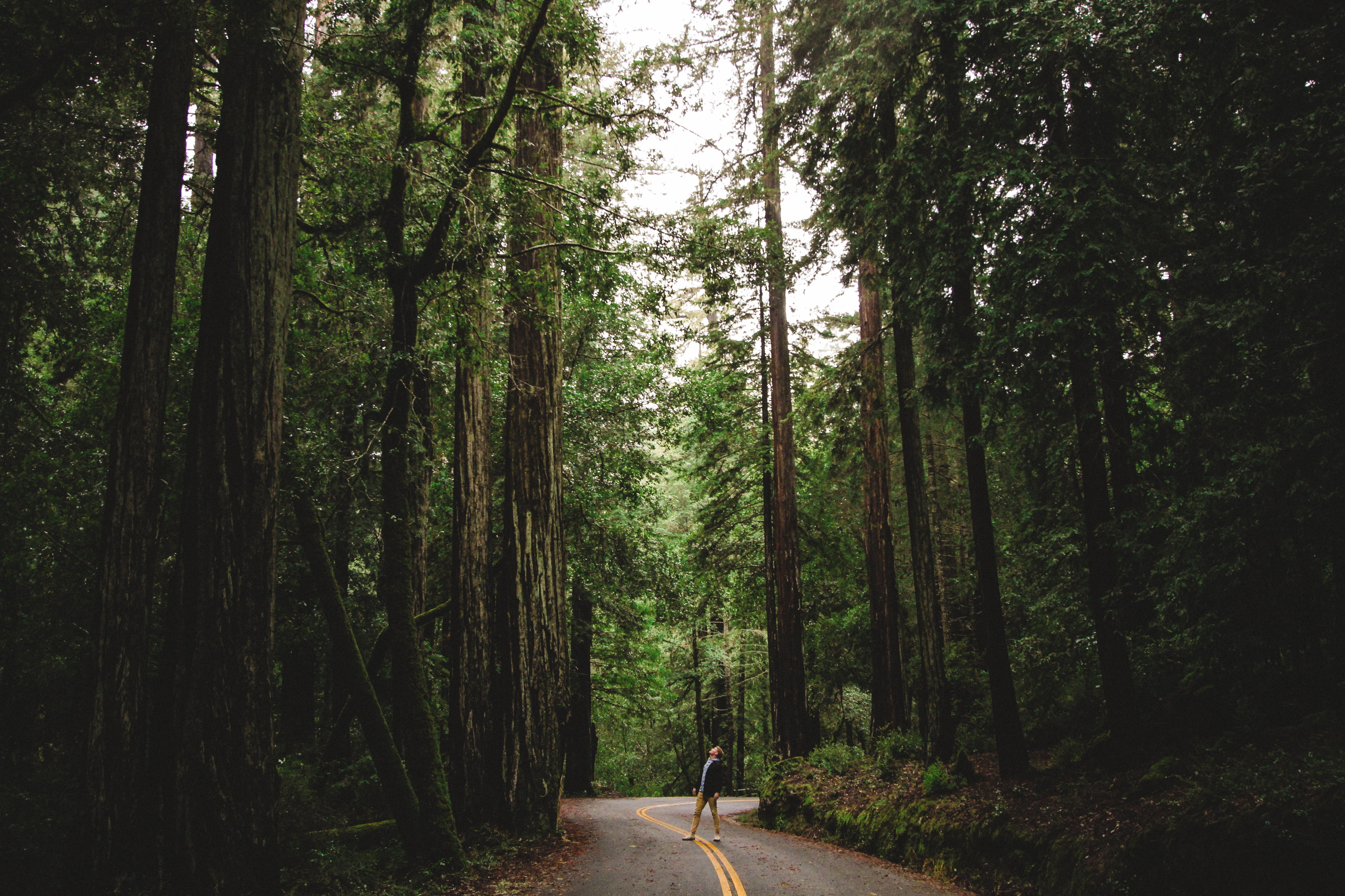 person standing on gray concrete road between tall trees during daytime photo
