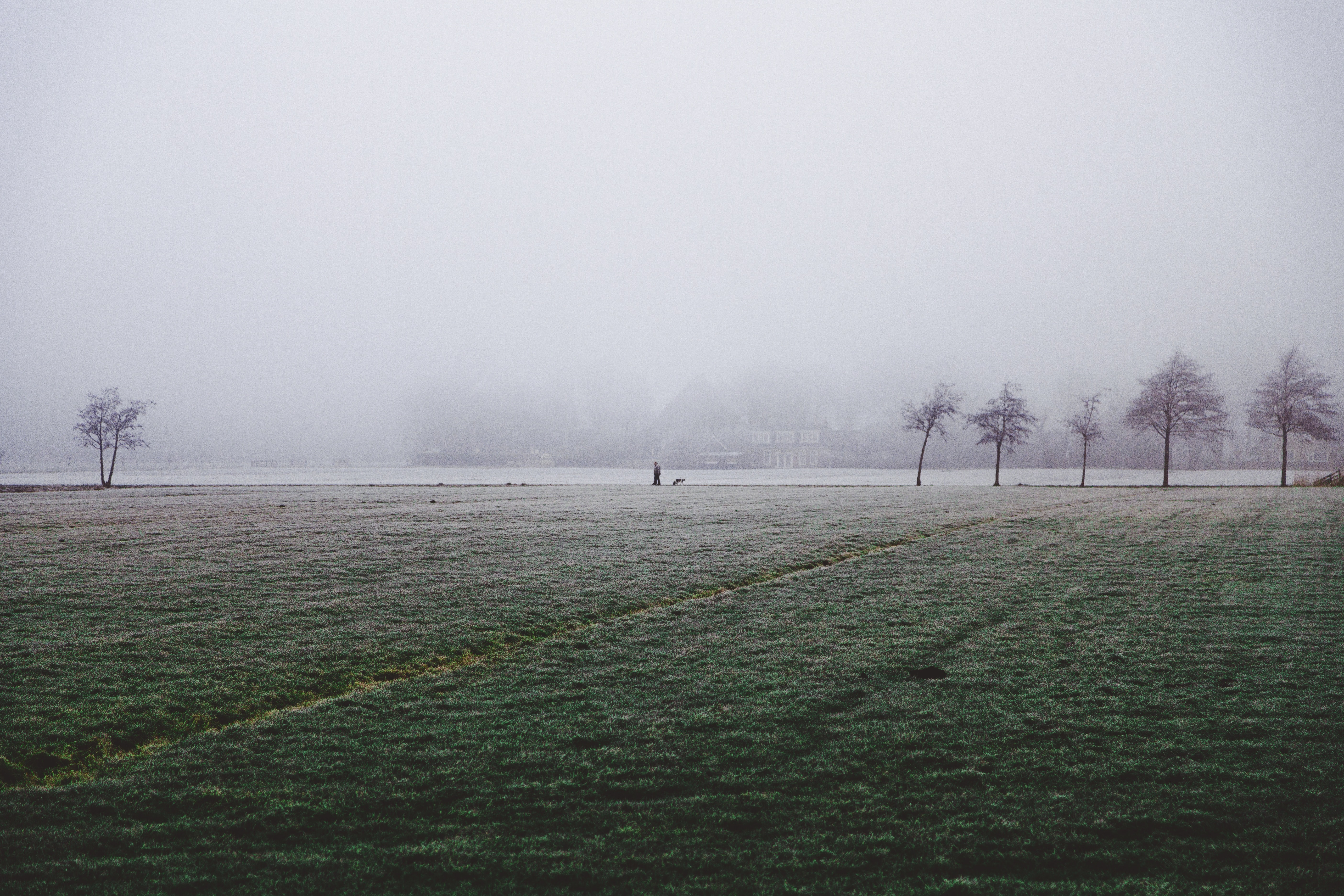Mist covers a rural field and bare trees in Leeuwarden