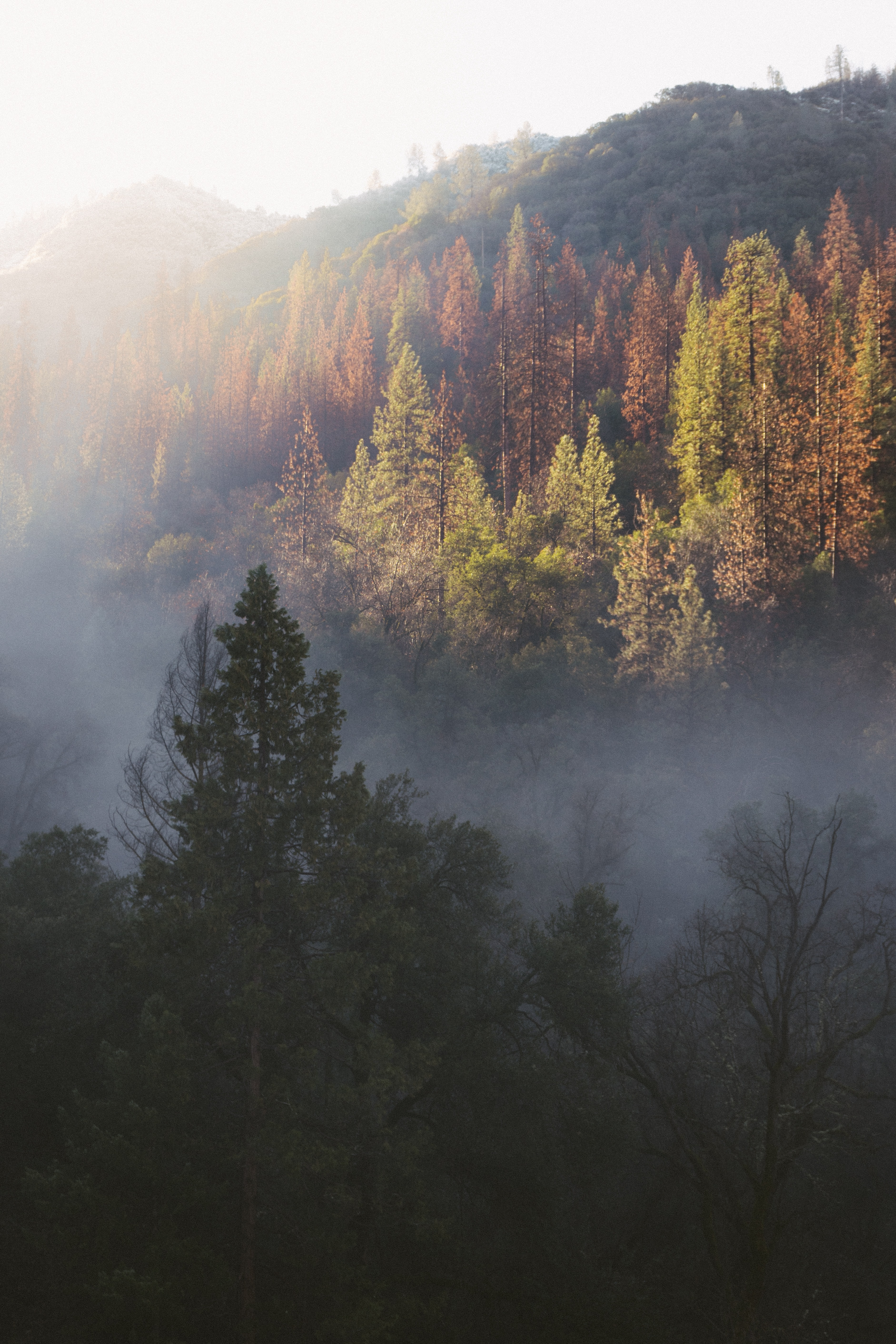 A forest with autumn-colored trees on hills near Merced River