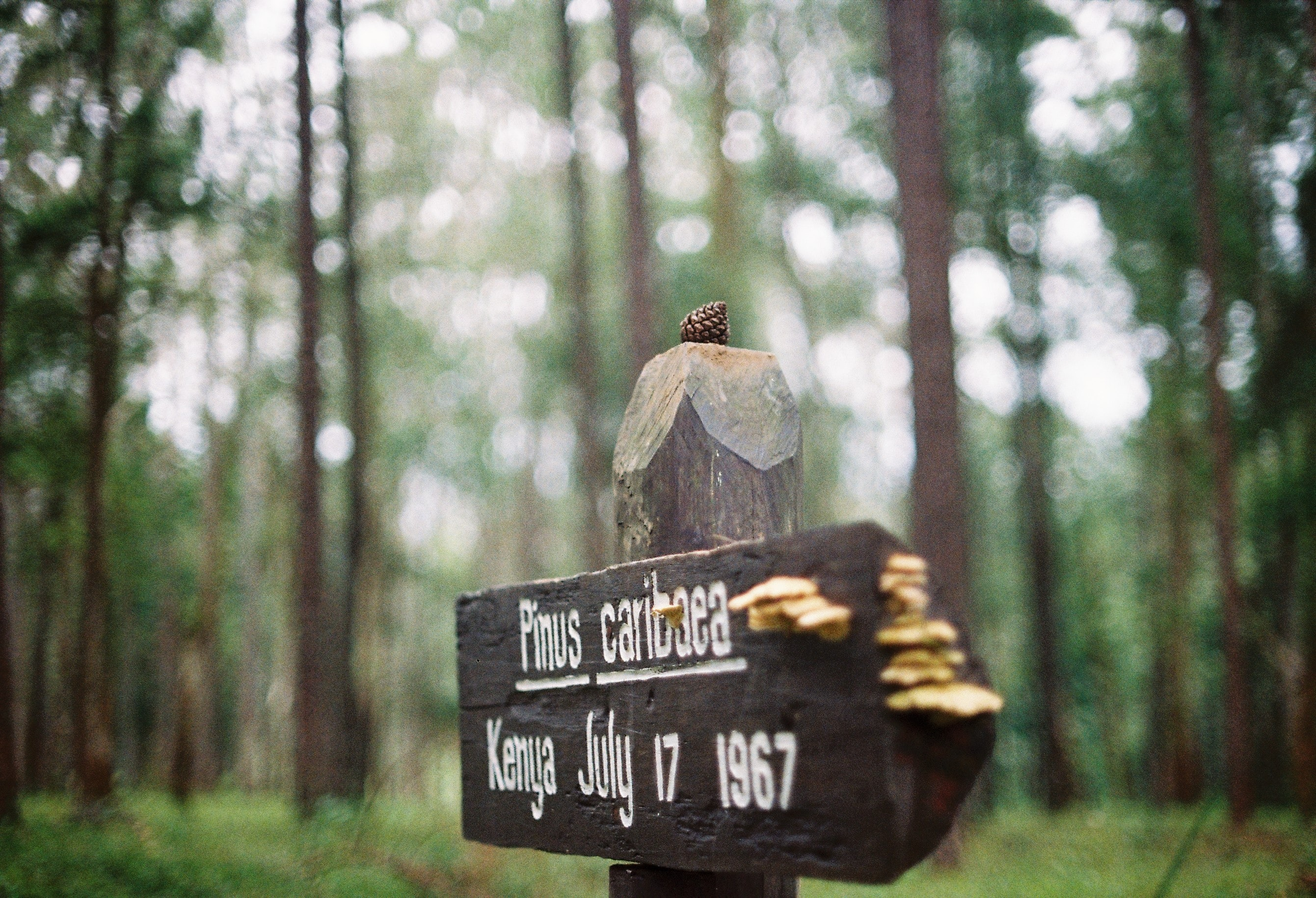 An old wooden signpost in a pine forest