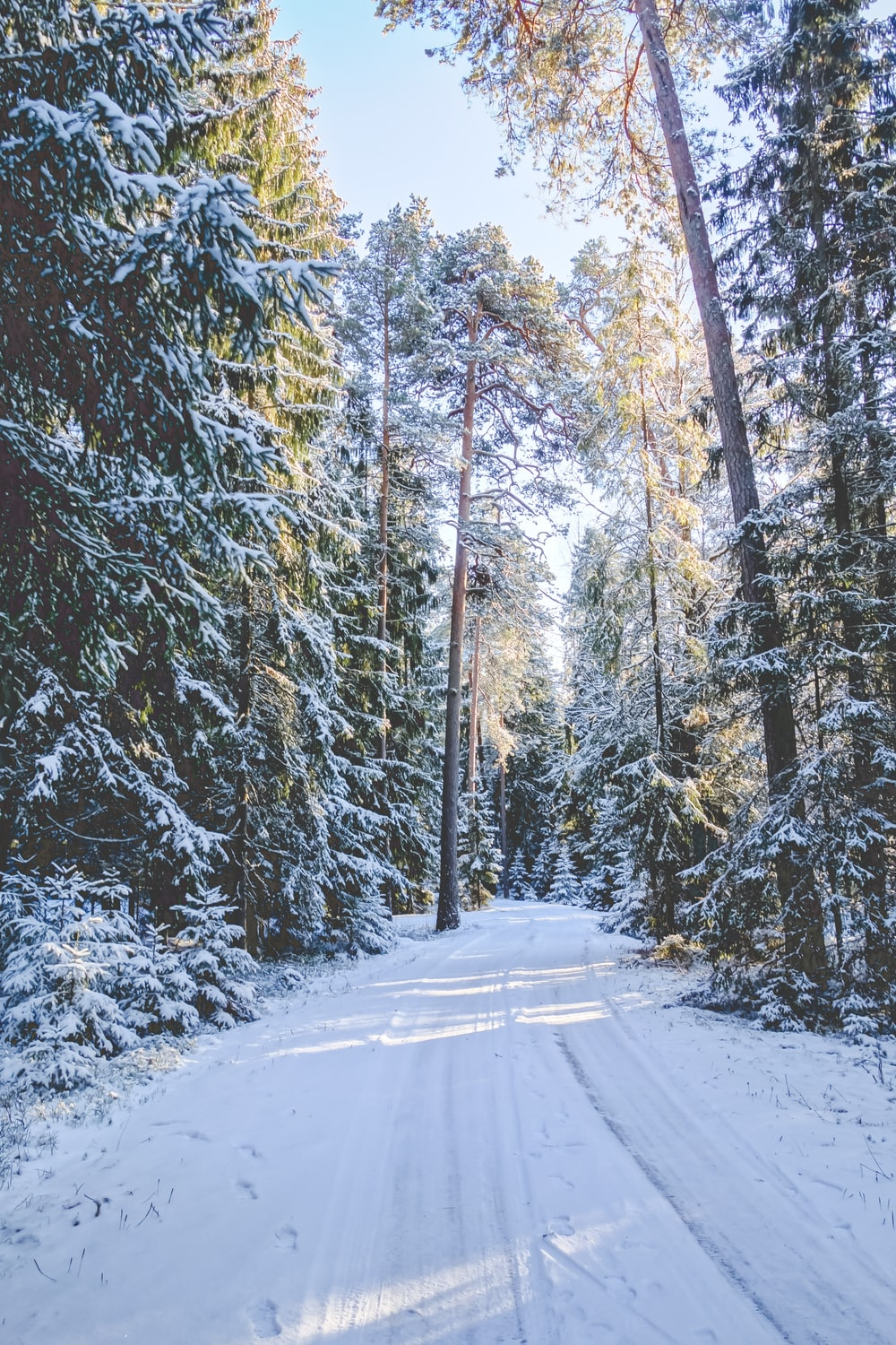 snow-covered road surrounded by trees during daytime